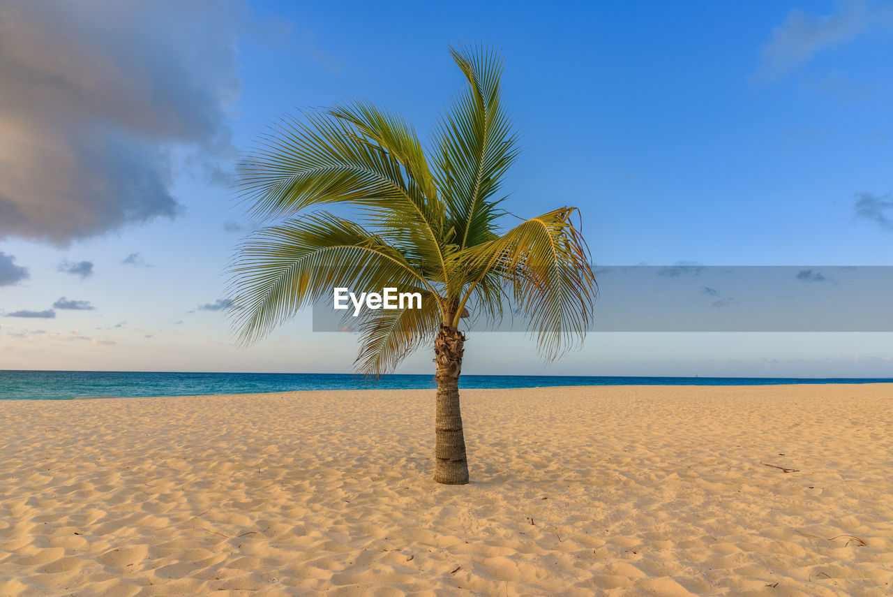 sky, land, beach, sand, scenics - nature, palm tree, tranquil scene, horizon, tropical climate, tranquility, tree, beauty in nature, sea, horizon over water, water, plant, nature, cloud - sky, non-urban scene, no people, outdoors, coconut palm tree, tropical tree, palm leaf