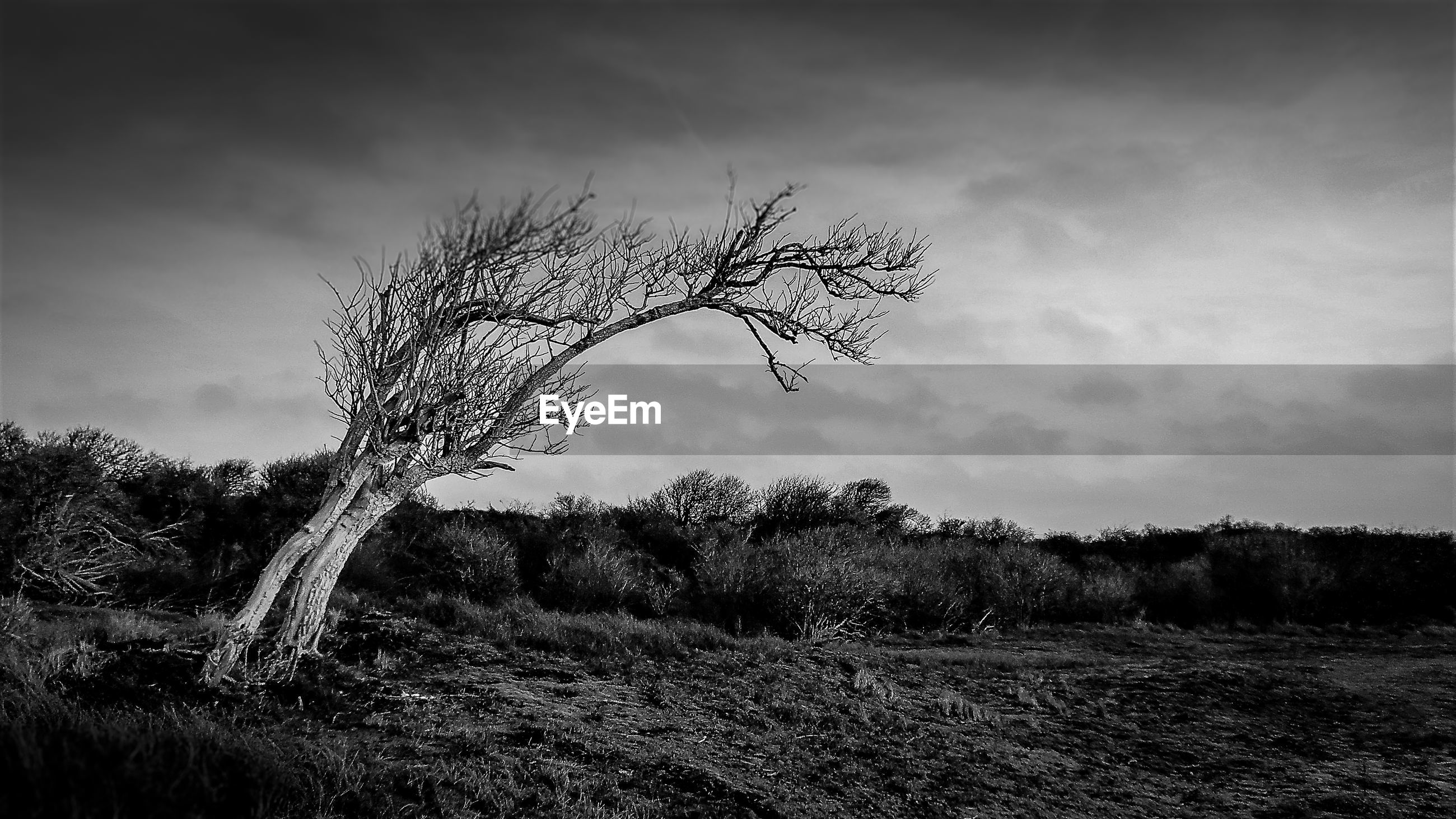 VIEW OF BARE TREE ON LANDSCAPE AGAINST SKY