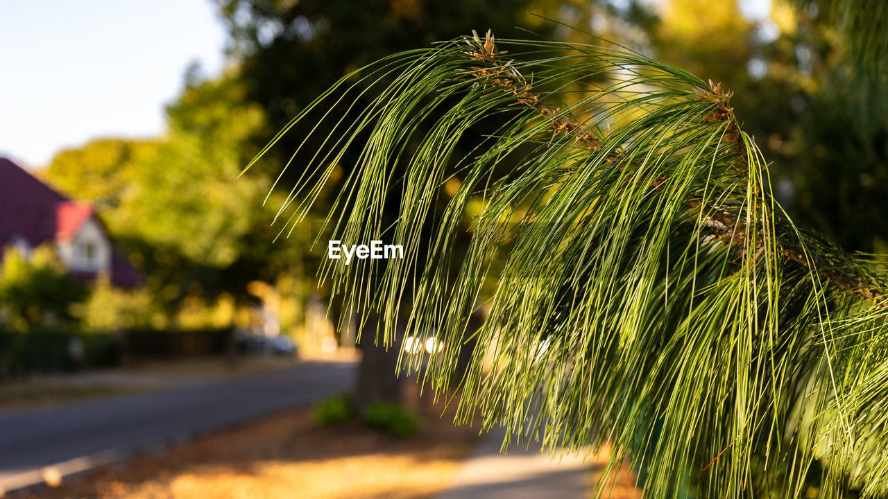 plant, growth, selective focus, nature, green color, no people, sunlight, focus on foreground, day, close-up, outdoors, field, tree, sky, land, beauty in nature, grass, leaf, footpath, architecture, palm leaf
