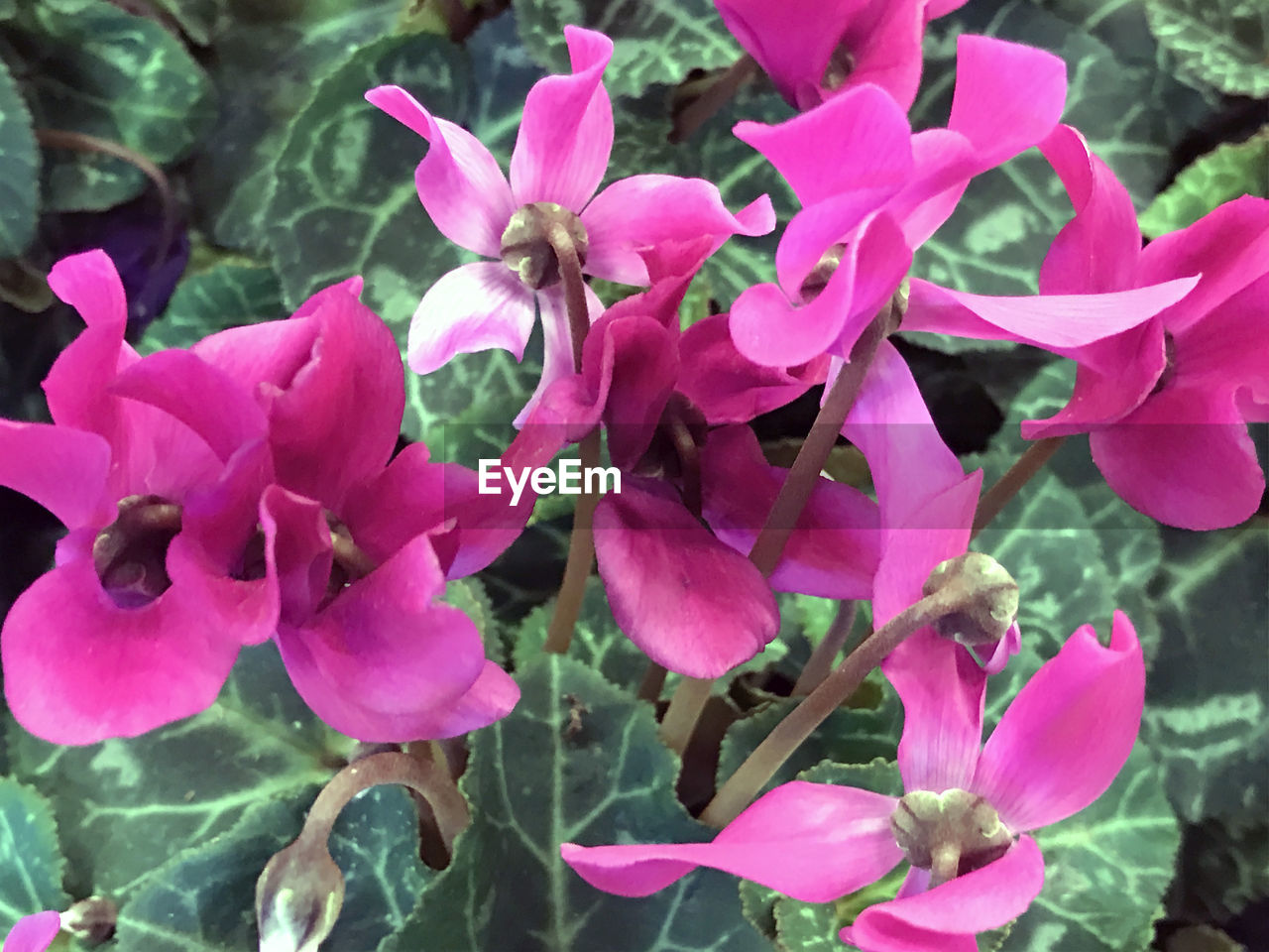 flower, fragility, growth, petal, beauty in nature, pink color, nature, plant, no people, flower head, day, freshness, outdoors, blooming, close-up, leaf, bougainvillea