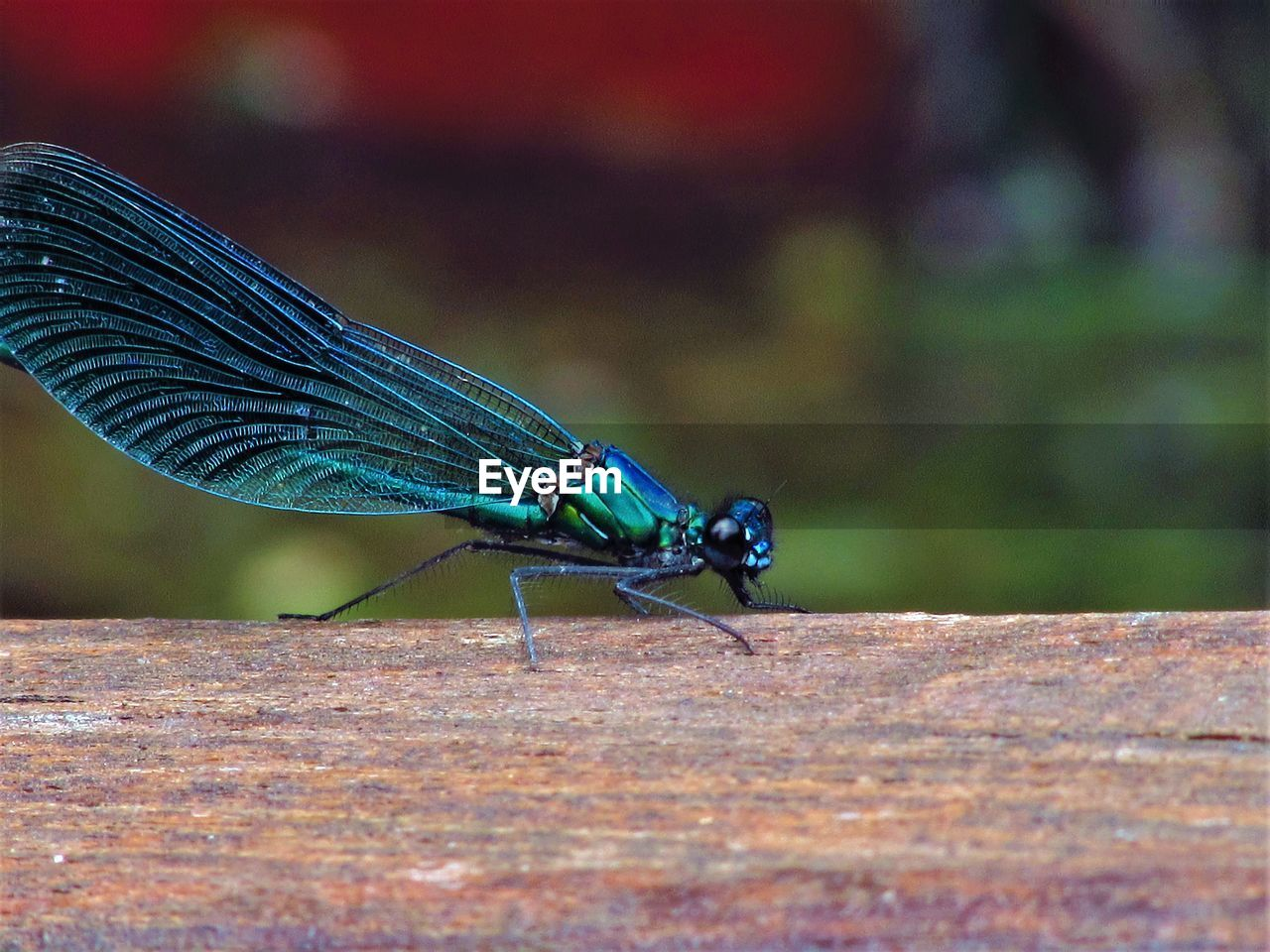 animal themes, invertebrate, animals in the wild, animal wildlife, animal, insect, one animal, close-up, day, blue, focus on foreground, selective focus, nature, animal wing, no people, outdoors, damselfly, wood - material, sunlight, green color