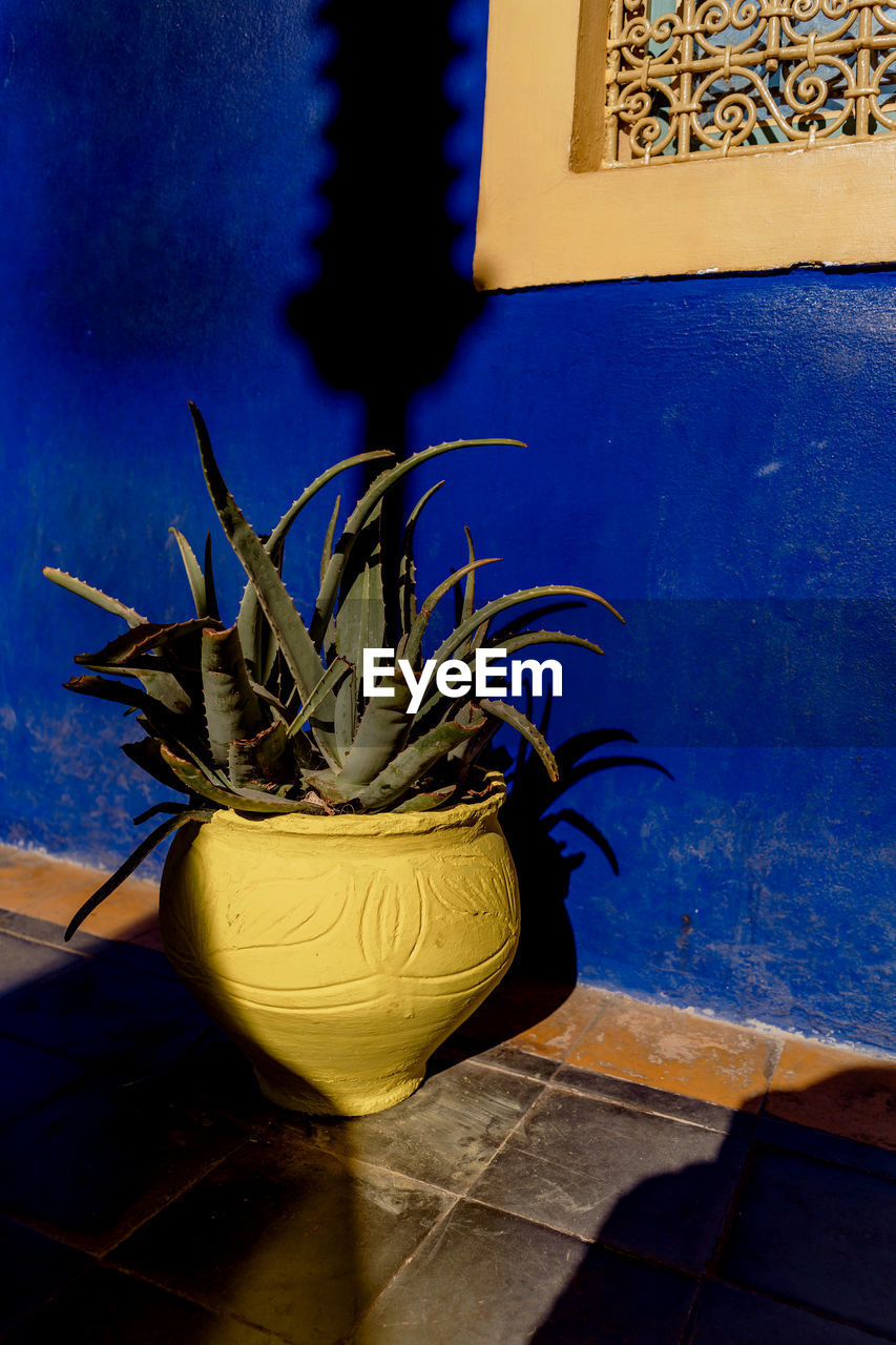 potted plant, plant, no people, indoors, growth, flooring, nature, wall - building feature, blue, architecture, shadow, day, tile, built structure, yellow, home interior, wall, houseplant, tiled floor