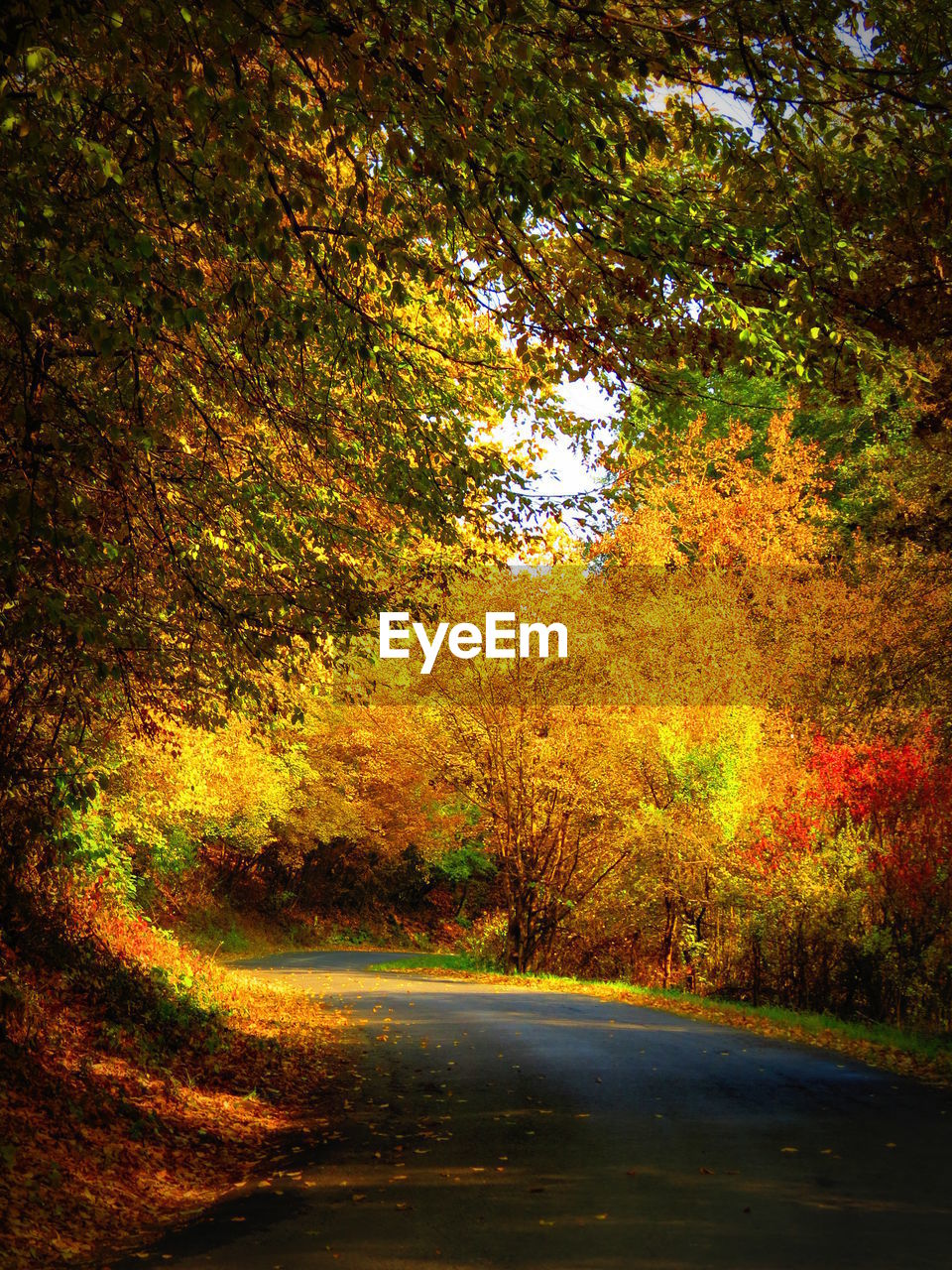 tree, plant, autumn, tranquility, change, beauty in nature, nature, growth, road, tranquil scene, no people, land, forest, direction, scenics - nature, day, the way forward, outdoors, orange color, transportation