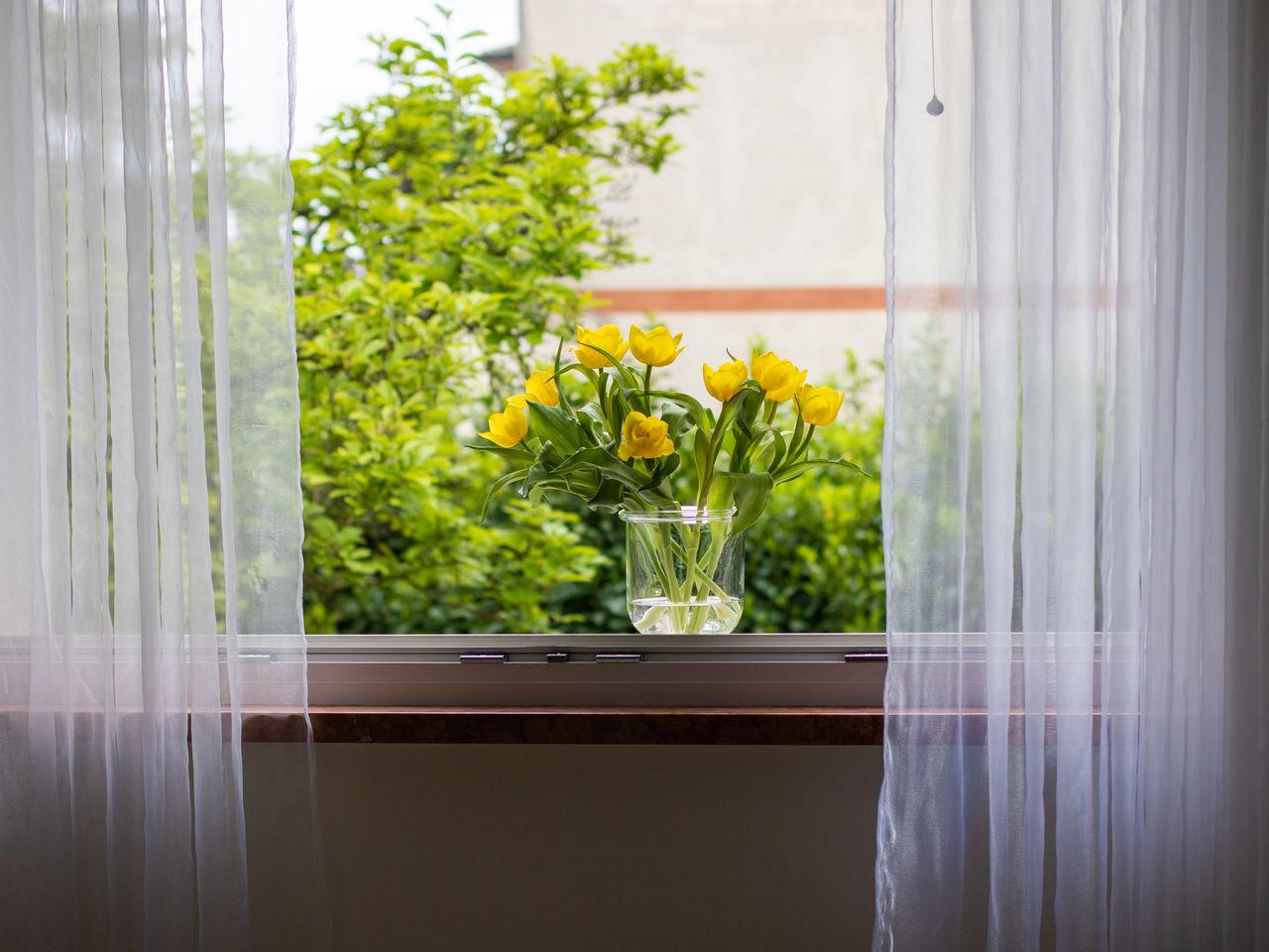 FLOWER POT ON WINDOW SILL