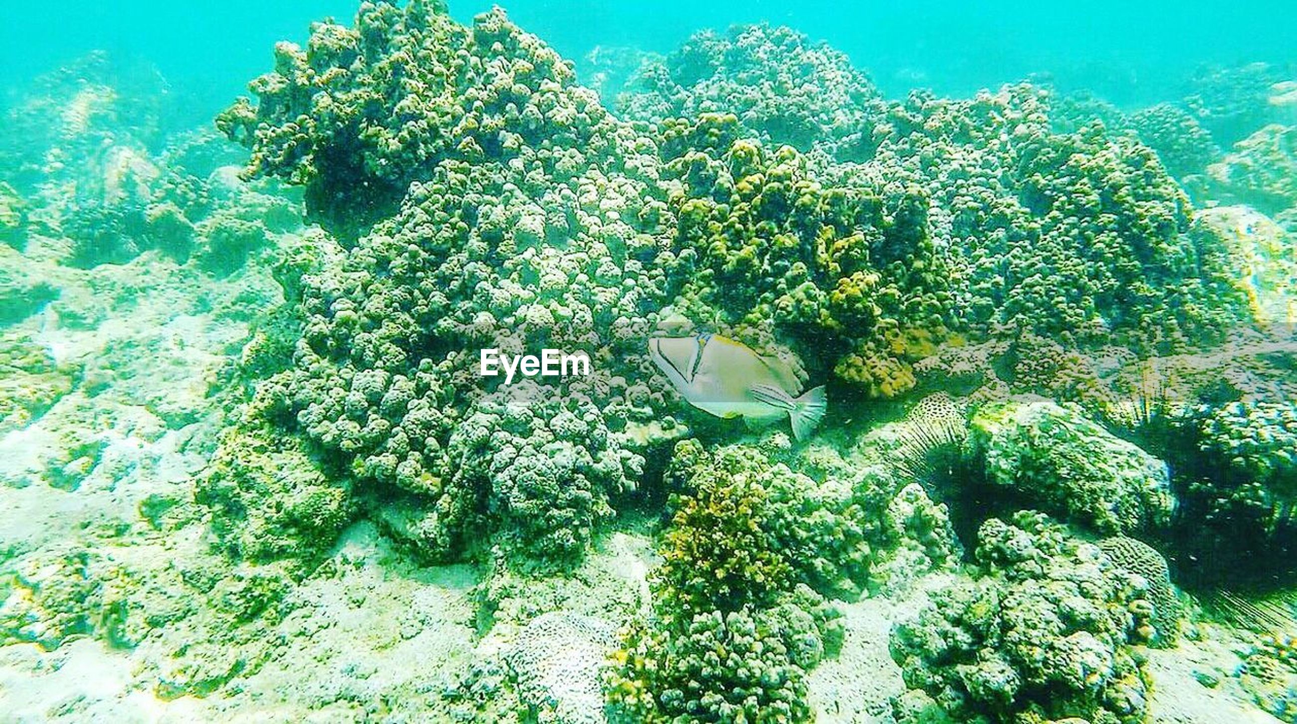 underwater, undersea, plant, nature, green color, growth, no people, beauty in nature, water, sea life, day, sea, freshness, tree, outdoors