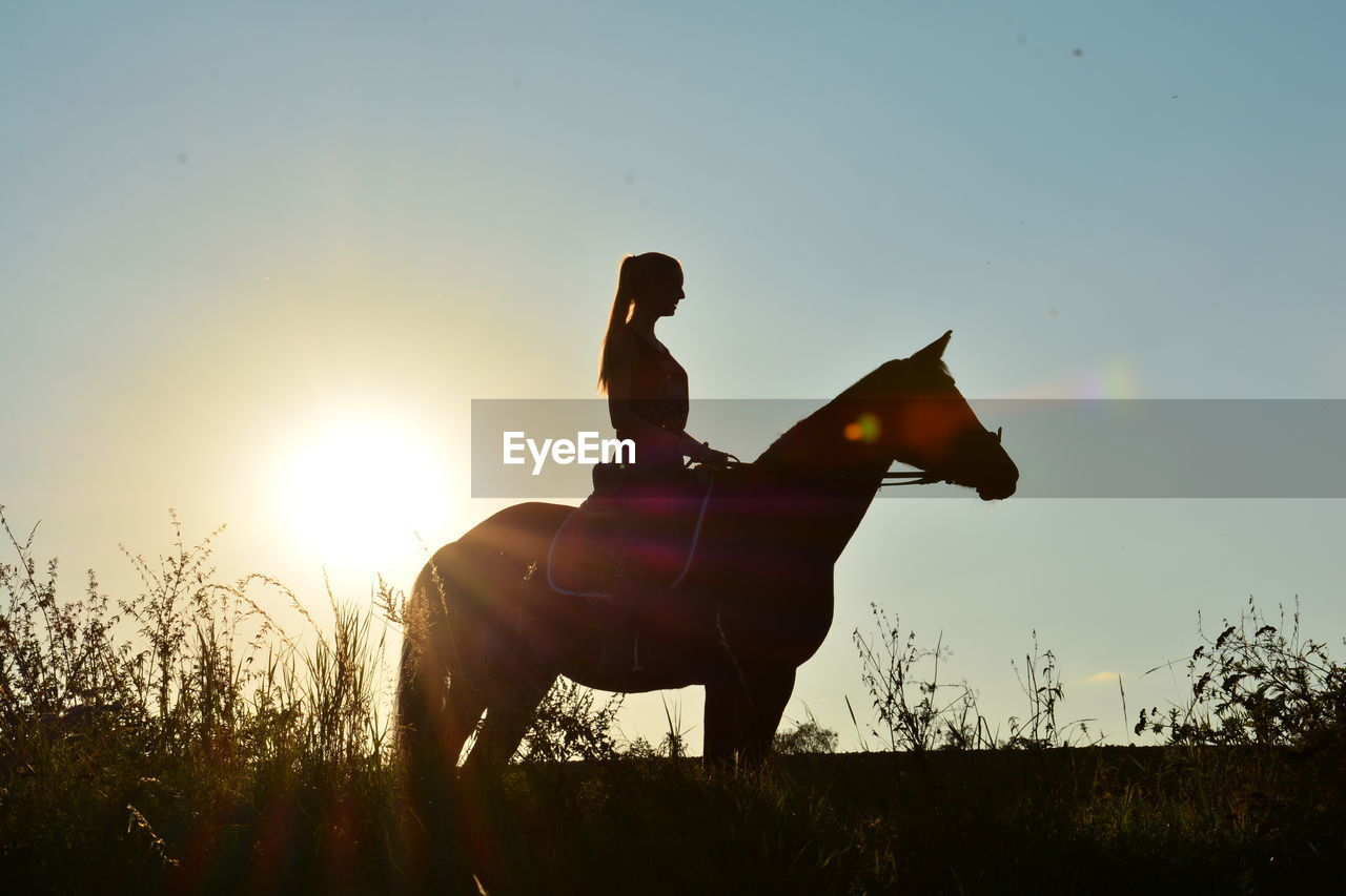 Silhouette Woman Sitting On Horse At Field Against Sky During Sunset