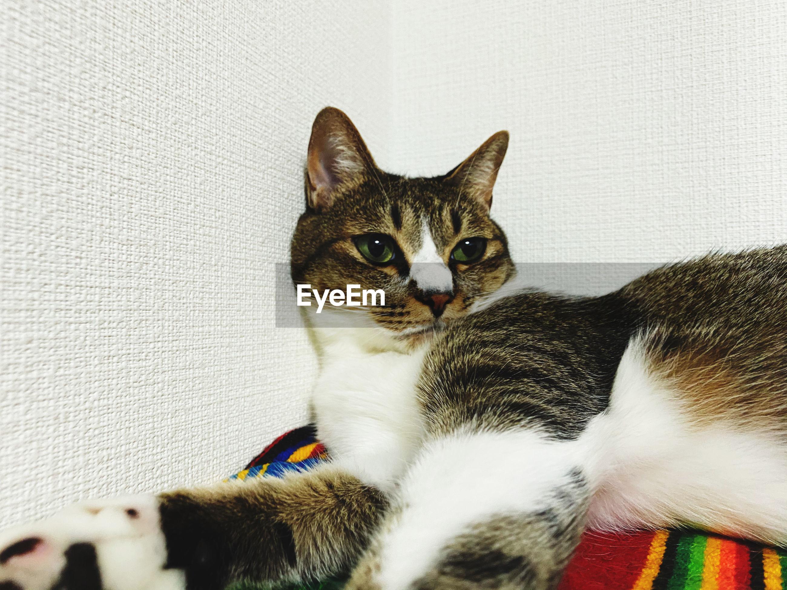 PORTRAIT OF A CAT ON SOFA