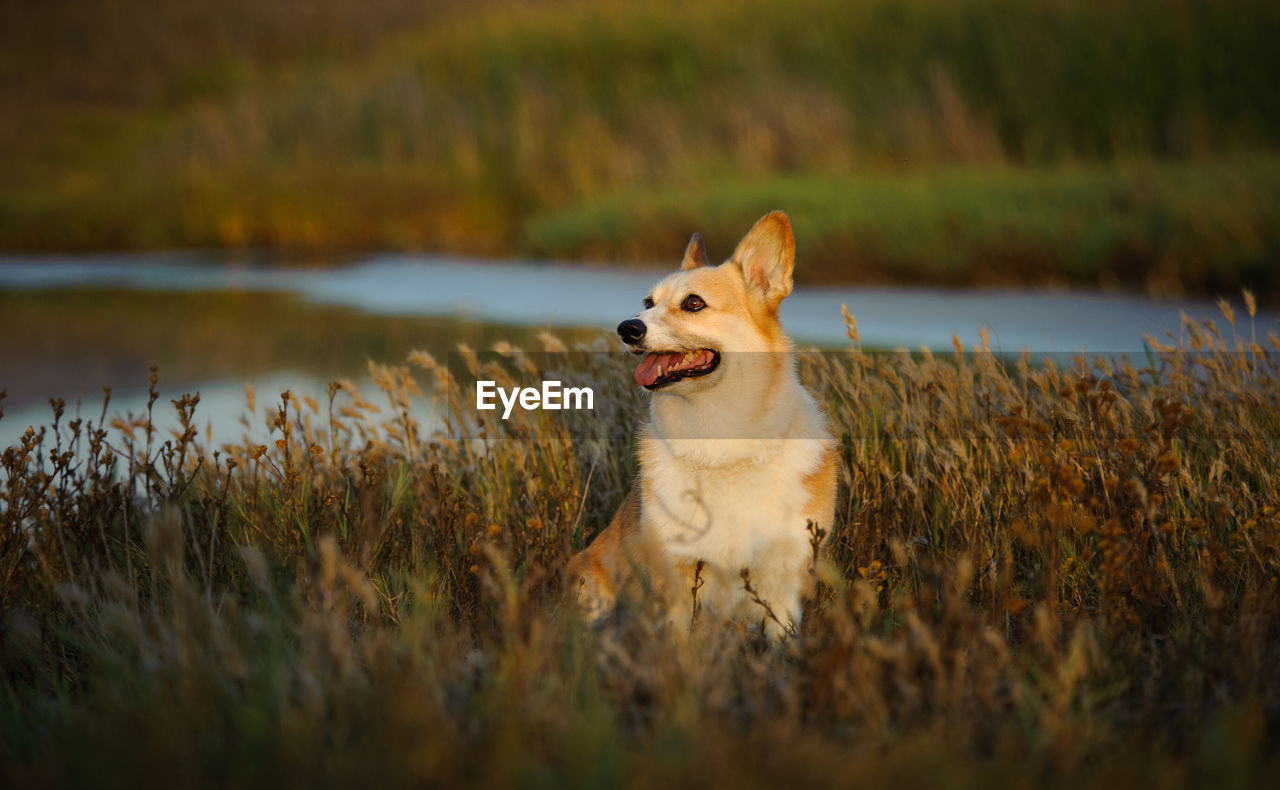 View Of Dog In Field