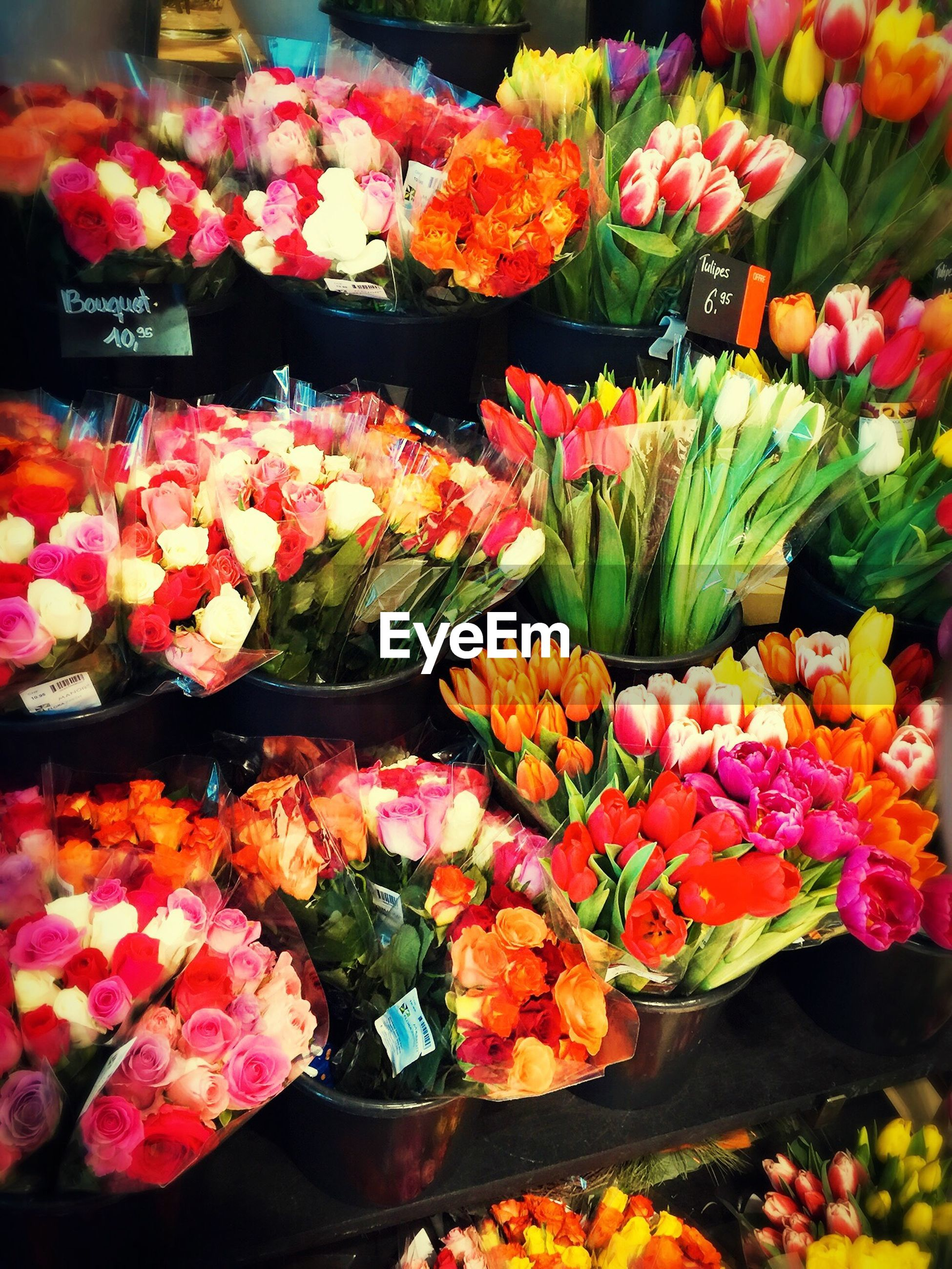 MULTI COLORED FLOWERS FOR SALE IN STORE