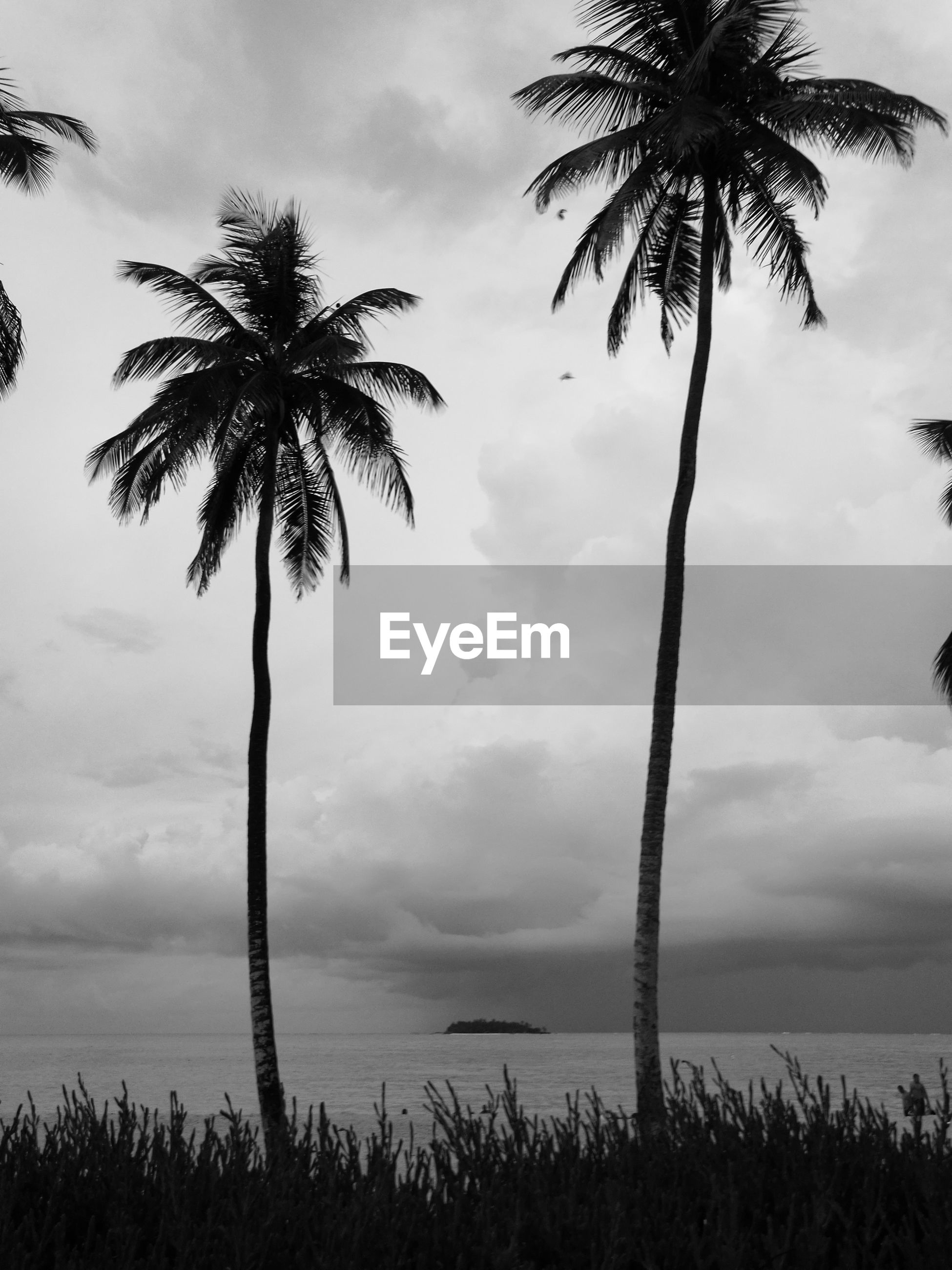 PALM TREES AGAINST CLOUDY SKY