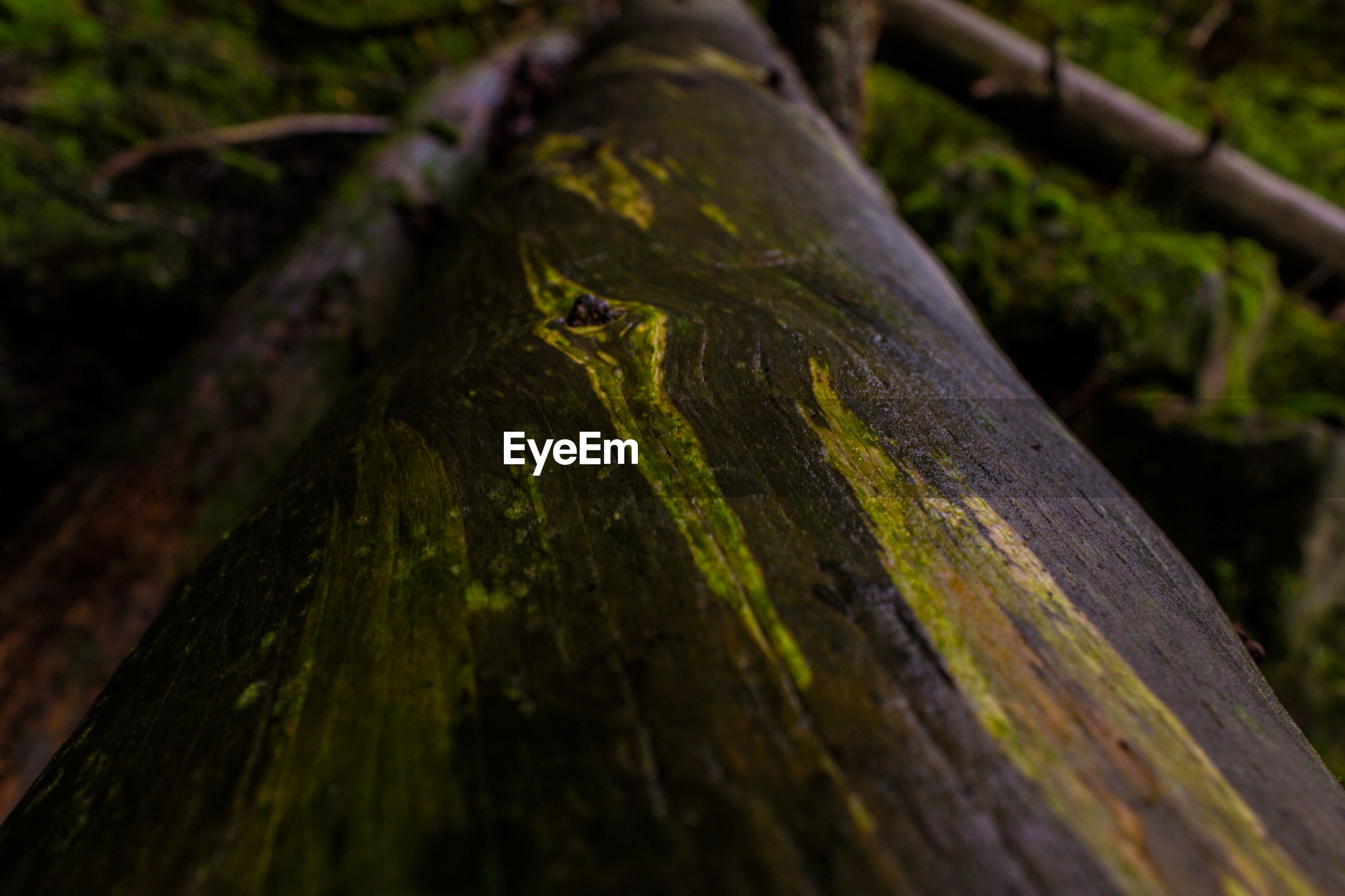 Surface level view of fallen tree