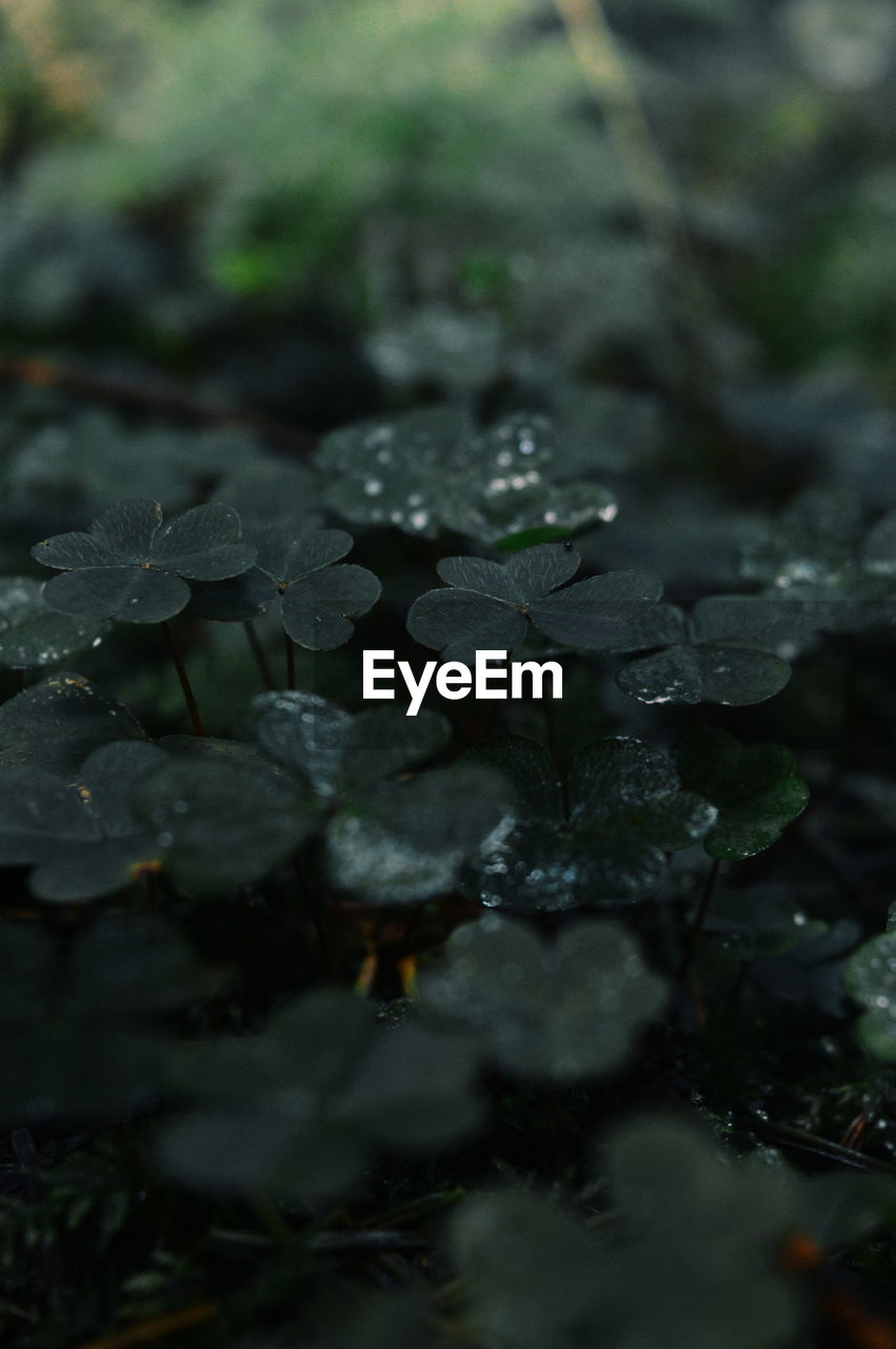 nature, water, drop, beauty in nature, selective focus, growth, day, no people, outdoors, plant, leaf, close-up, fragility, freshness