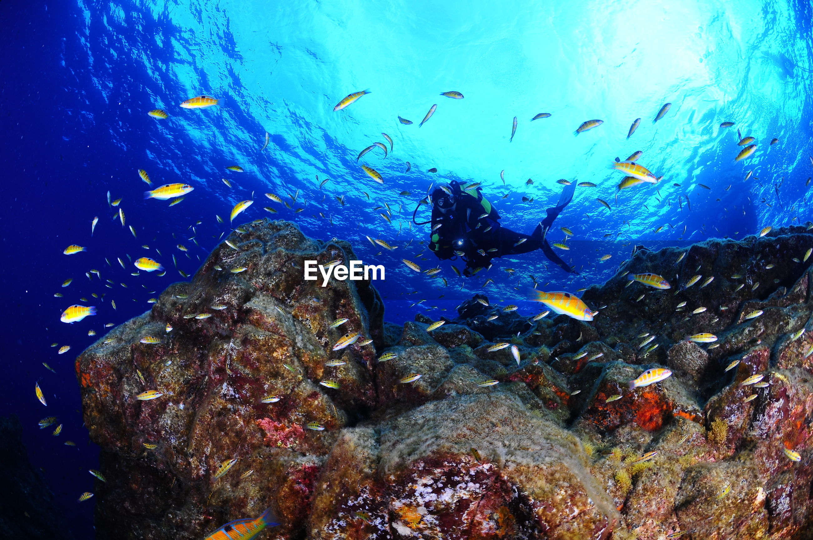 Underwater view of fish and scuba diver