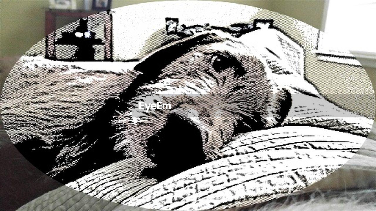 indoors, animal themes, close-up, domestic animals, pets, no people, mammal, day