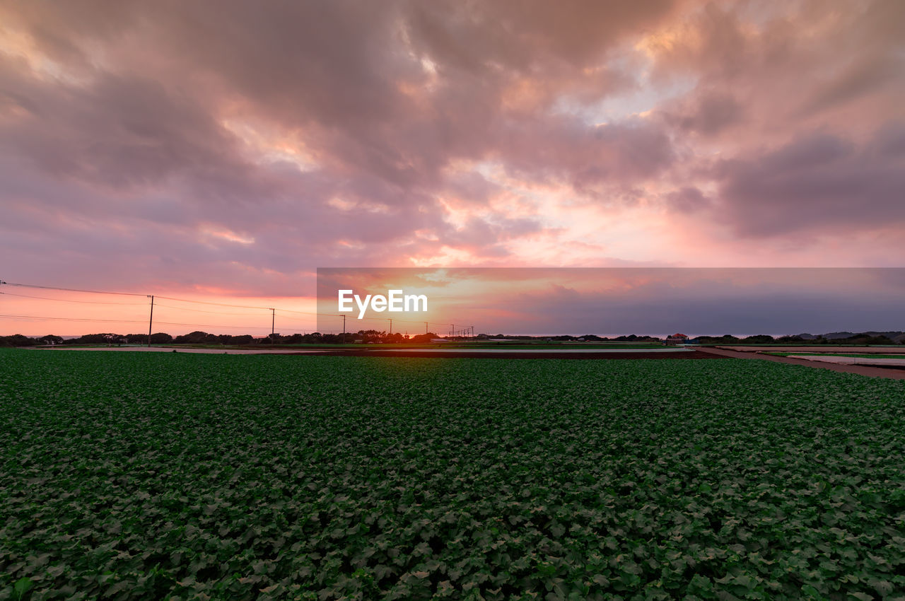 sunset, agriculture, beauty in nature, field, sky, nature, tranquil scene, orange color, cloud - sky, tranquility, scenics, growth, rural scene, landscape, no people, green color, outdoors, day