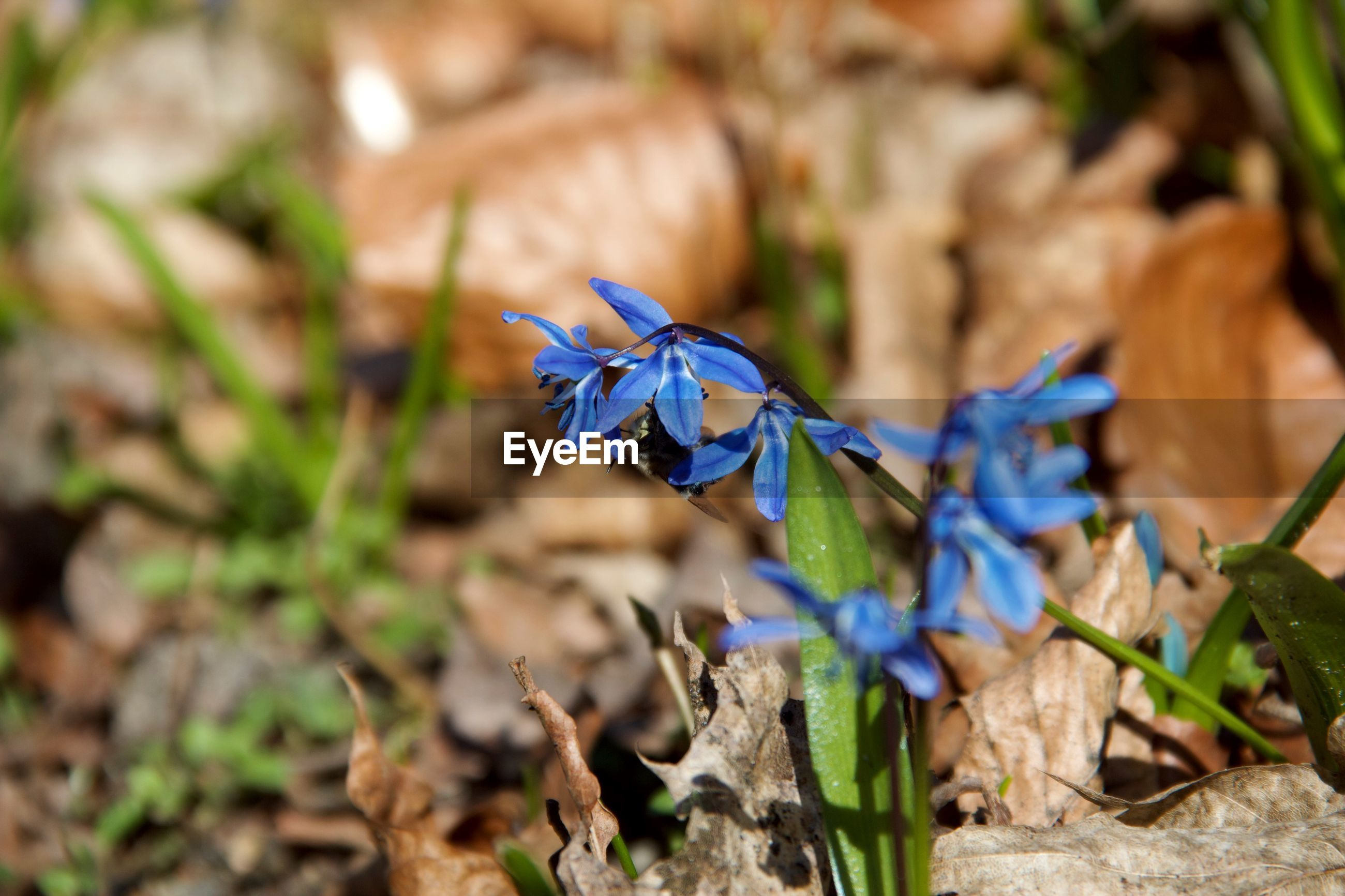 CLOSE-UP OF BLUE FLOWERING PLANT ON LAND