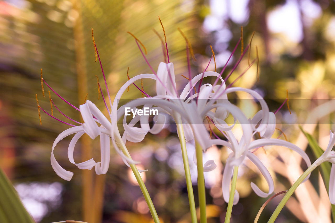 plant, flower, beauty in nature, flowering plant, growth, vulnerability, fragility, close-up, freshness, focus on foreground, petal, nature, flower head, no people, inflorescence, day, selective focus, outdoors, land, botany