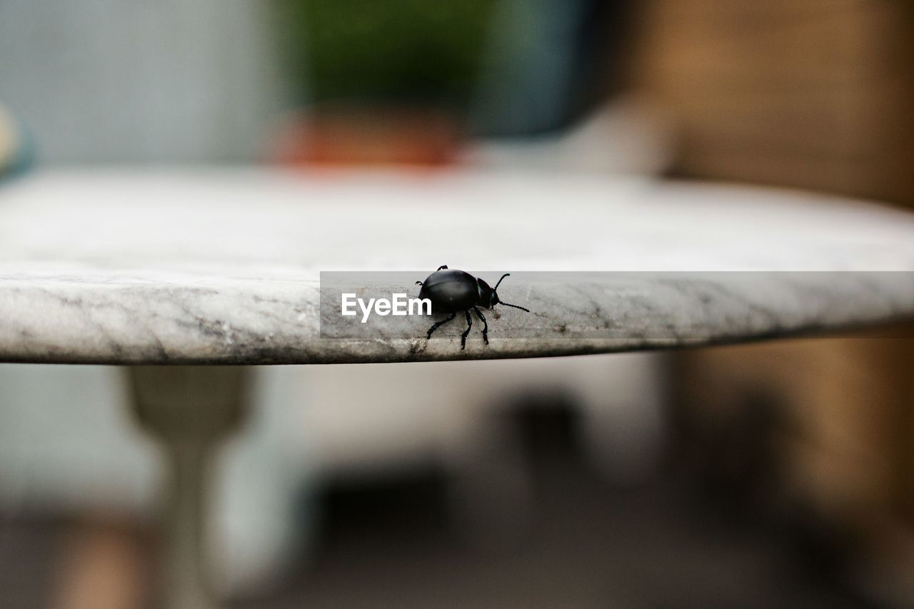 invertebrate, animal wildlife, animal themes, insect, animals in the wild, animal, one animal, close-up, day, no people, focus on foreground, selective focus, outdoors, fly, housefly, animal wing, nature, full length, wood - material, metal