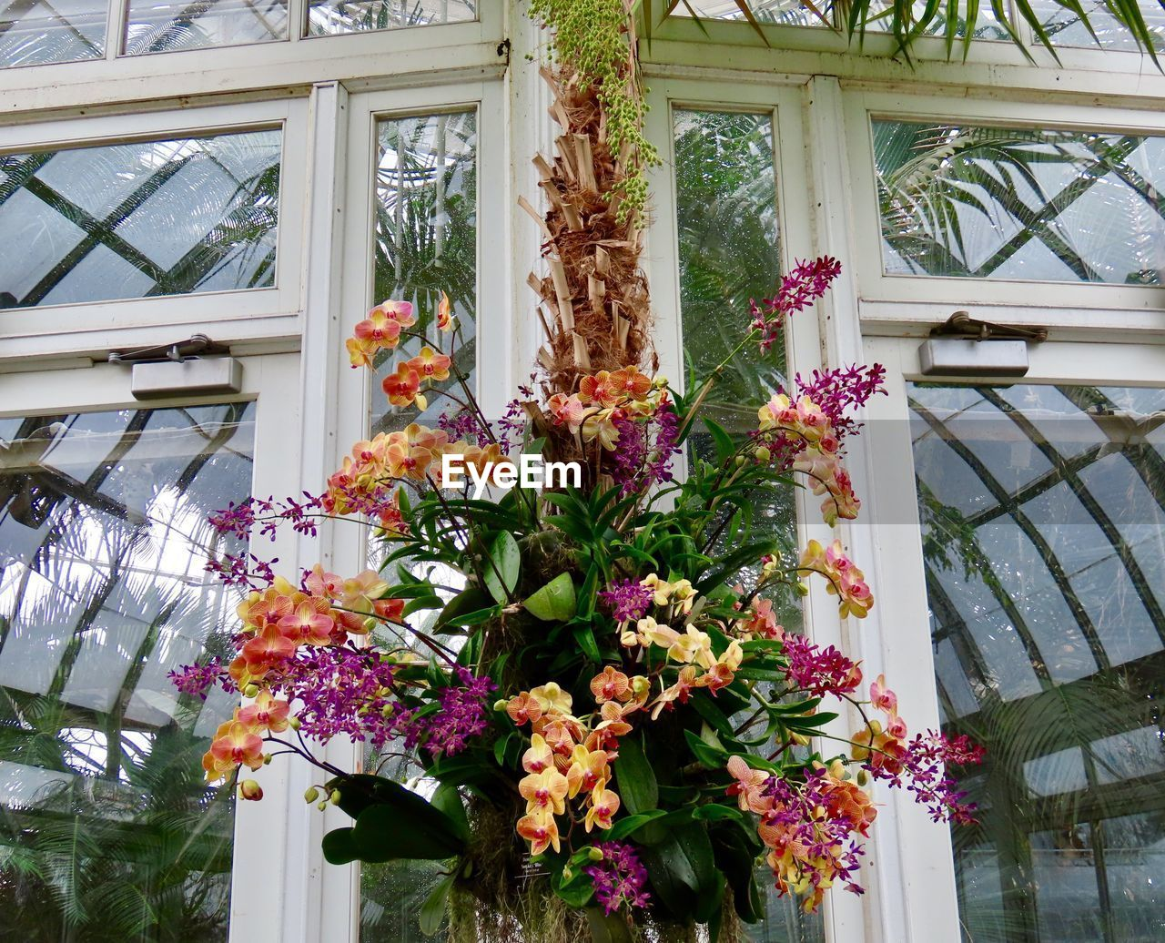 flowering plant, flower, architecture, plant, built structure, vulnerability, building exterior, freshness, fragility, beauty in nature, day, no people, growth, nature, building, window, outdoors, low angle view, close-up, house, flower head, flower arrangement, flower pot, bouquet