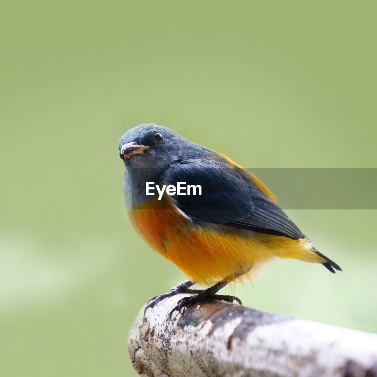 animal themes, animal, animal wildlife, one animal, vertebrate, animals in the wild, bird, perching, no people, close-up, focus on foreground, copy space, day, nature, outdoors, full length, wood - material, beauty in nature, looking, zoology