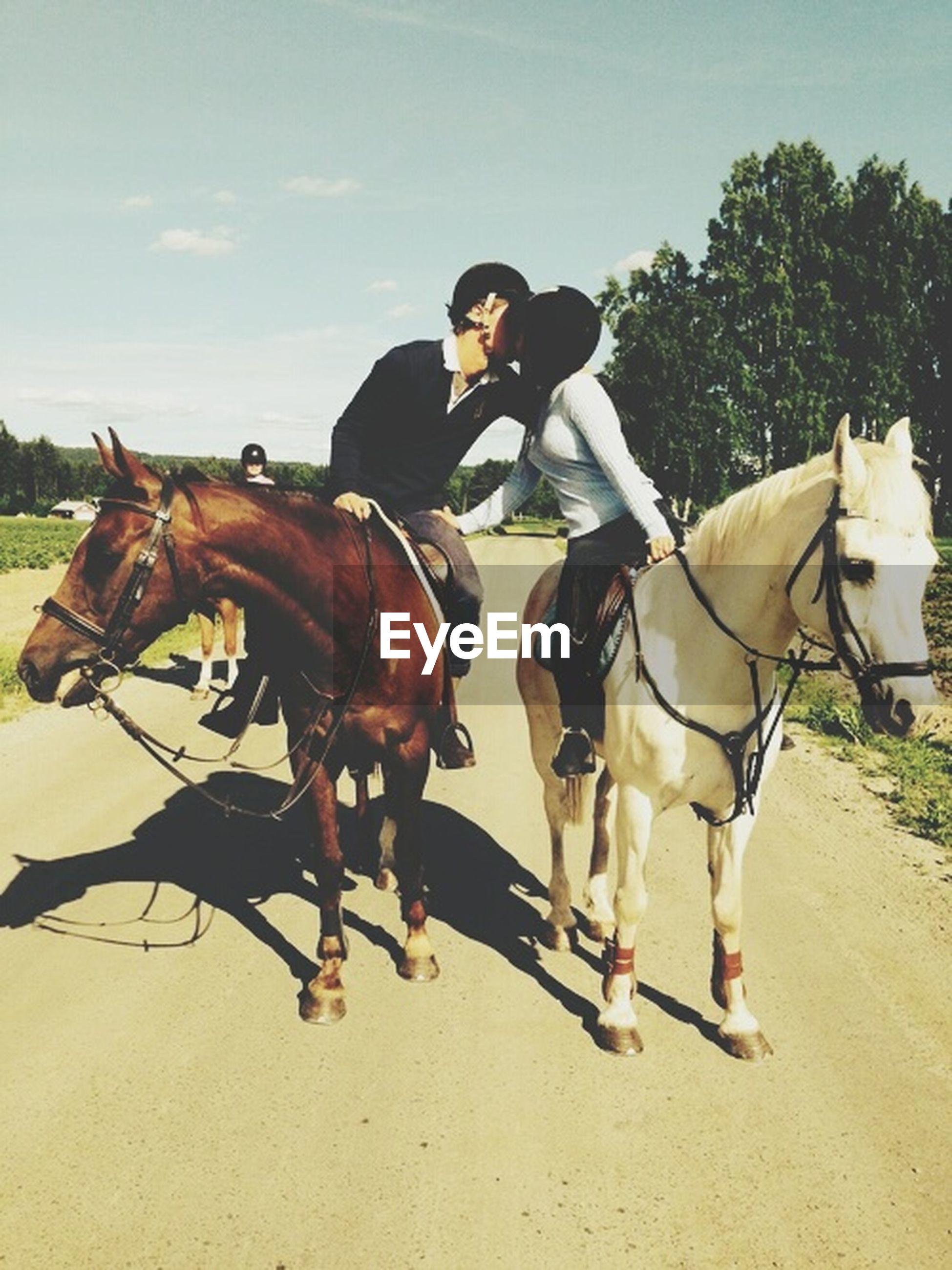 horse, domestic animals, animal themes, working animal, mammal, livestock, full length, horseback riding, lifestyles, togetherness, sky, two animals, leisure activity, herbivorous, men, standing, sunlight, riding