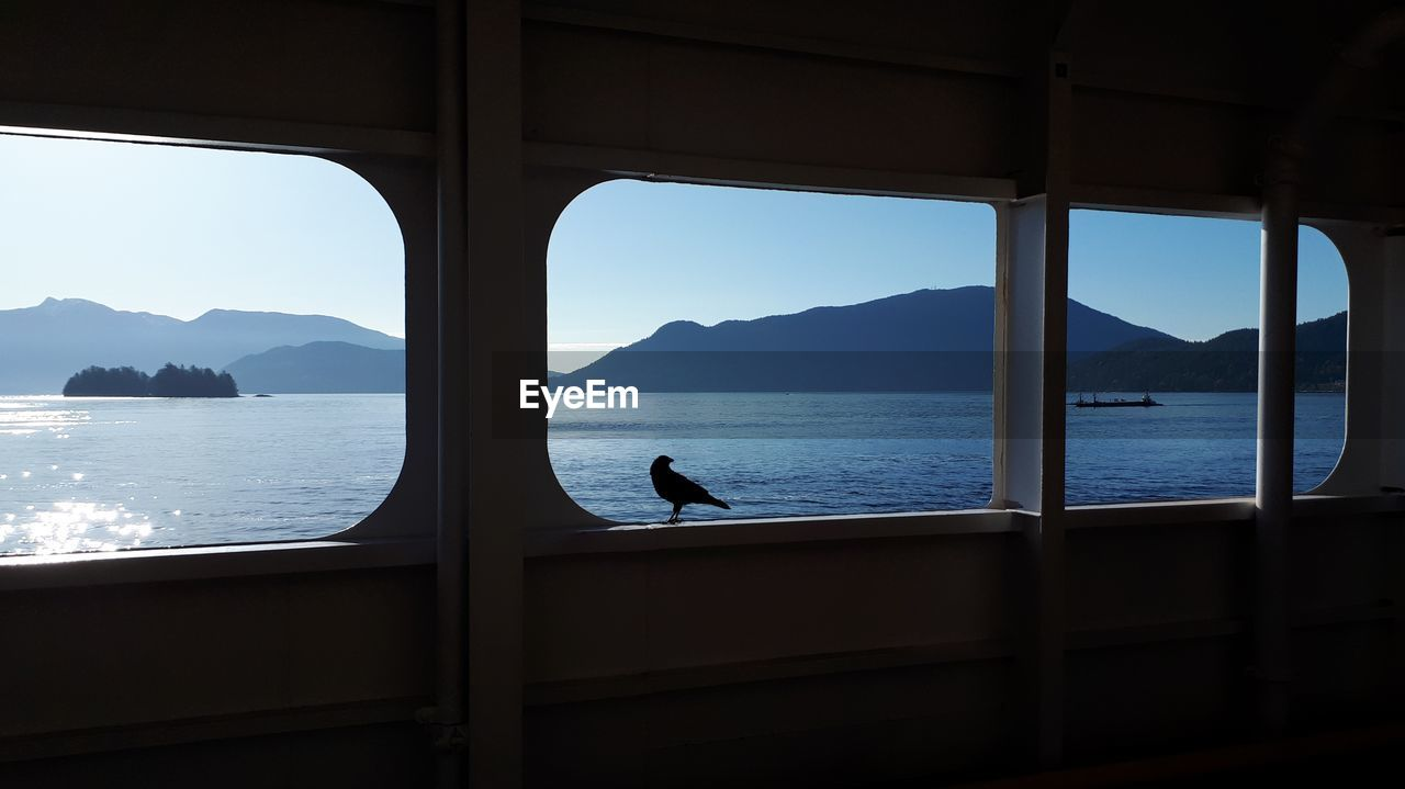 Bird Perching On Window In Ferry At Sea