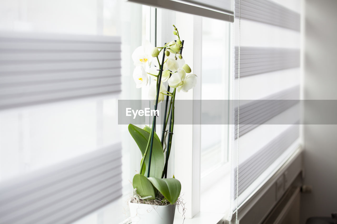 flower, white color, green color, vase, plant, home interior, no people, growth, freshness, indoors, leaf, close-up, nature, day, fragility, snowdrop, beauty in nature, bouquet, flower head