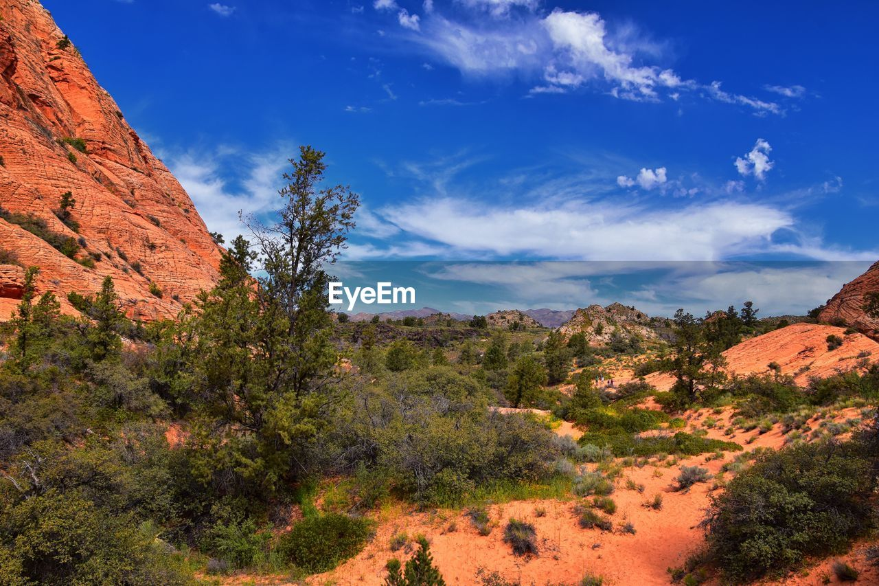 sky, plant, cloud - sky, beauty in nature, tranquil scene, tree, scenics - nature, tranquility, nature, rock, non-urban scene, mountain, environment, growth, landscape, no people, rock - object, rock formation, day, blue, outdoors, arid climate, formation, climate, eroded, semi-arid