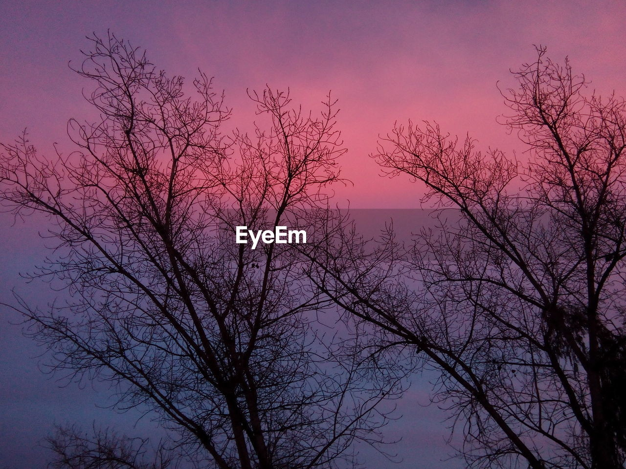bare tree, tree, branch, nature, beauty in nature, low angle view, no people, tranquility, outdoors, sunset, sky, day