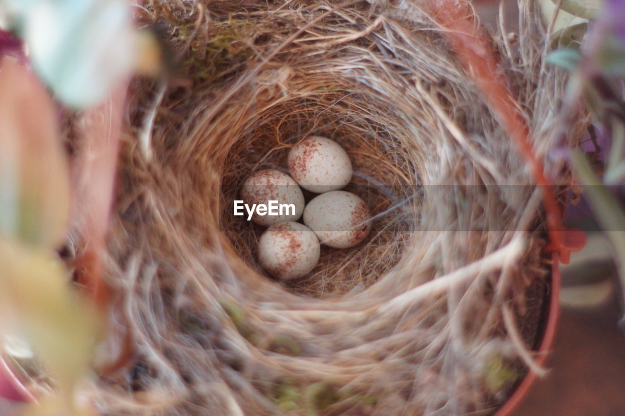 animal nest, close-up, selective focus, no people, food, egg, basket, day, food and drink, high angle view, beginnings, container, bird nest, animal egg, new life, wellbeing, nature, outdoors, vulnerability, still life