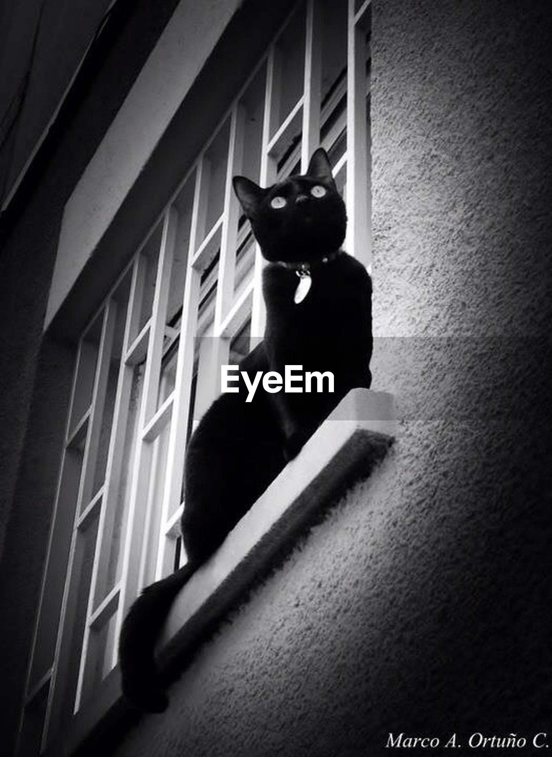 window, architecture, one animal, built structure, pets, building exterior, animal themes, domestic animals, black color, full length, low angle view, domestic cat, building, cat, sitting, indoors, house, glass - material, day, mammal