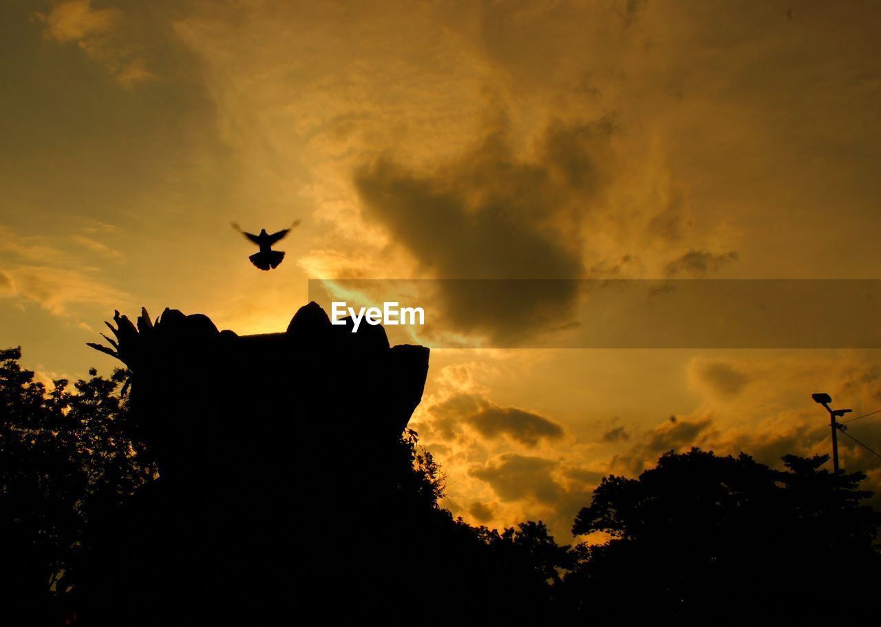 silhouette, sunset, flying, bird, animals in the wild, animal themes, orange color, tree, sky, one animal, nature, animal wildlife, low angle view, wildlife, cloud - sky, mid-air, beauty in nature, outdoors, scenics, no people, spread wings, bat - animal, bird of prey, day