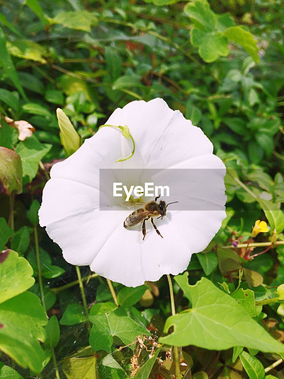 one animal, insect, animal themes, growth, plant, petal, flower, nature, animals in the wild, white color, high angle view, leaf, fragility, no people, outdoors, beauty in nature, day, animal wildlife, bee, flower head, close-up, freshness