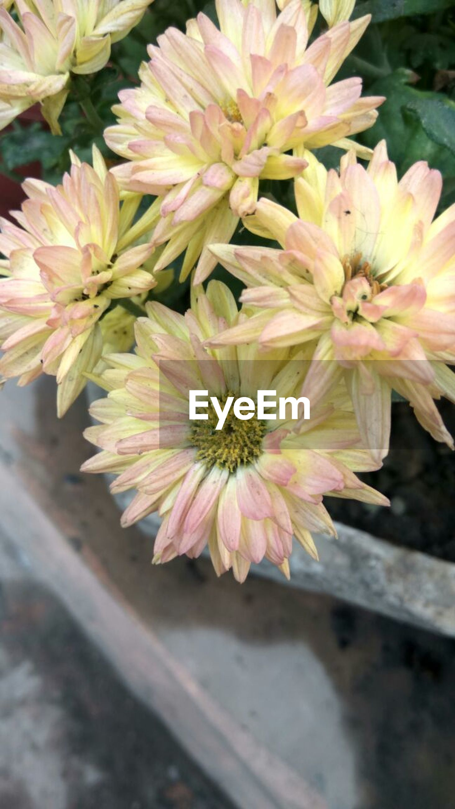 flower, nature, growth, beauty in nature, petal, freshness, fragility, plant, flower head, outdoors, no people, day, close-up, blooming