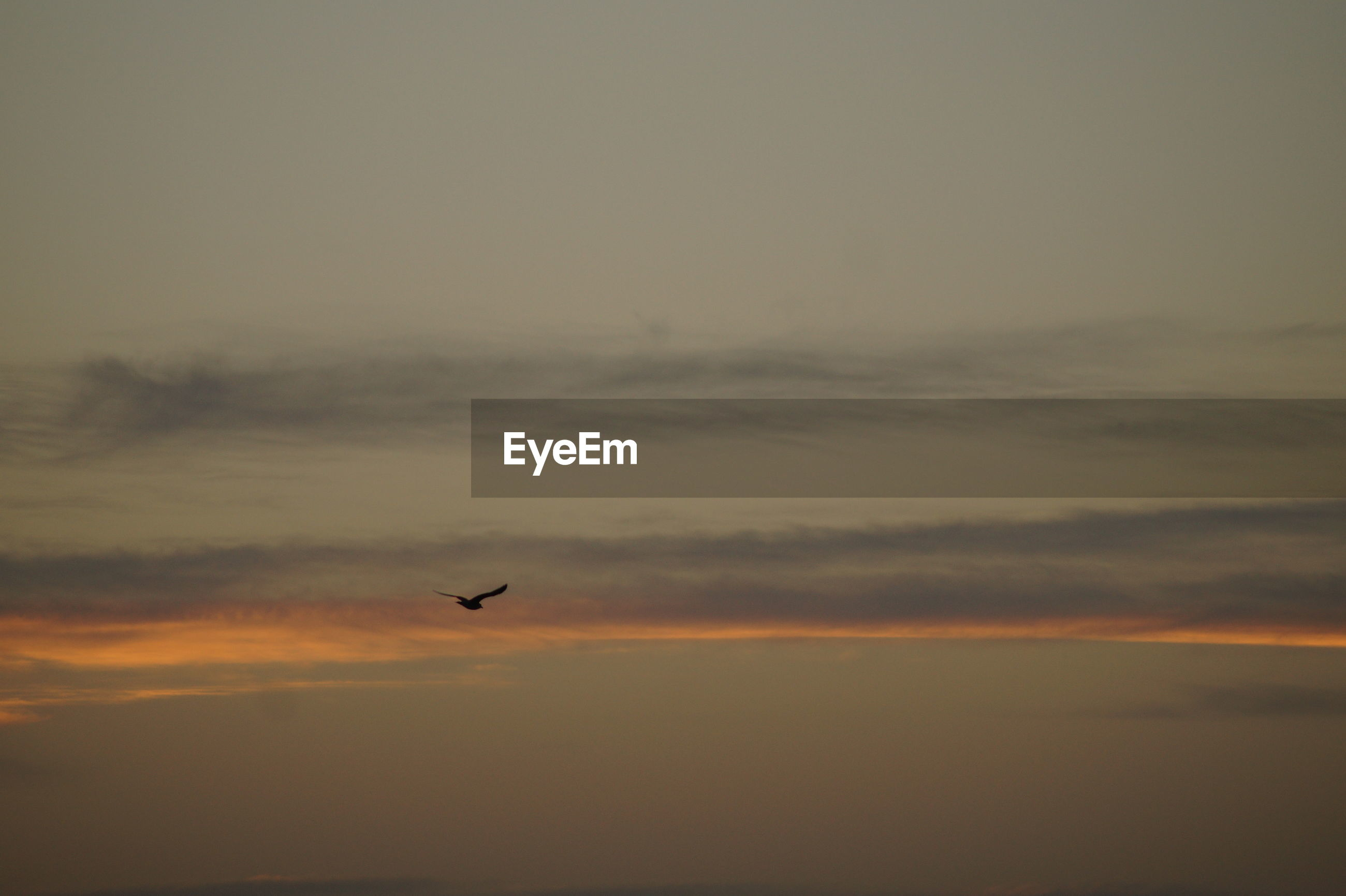 sunset, bird, beauty in nature, sky, nature, flying, silhouette, scenics, orange color, animals in the wild, tranquil scene, animal themes, tranquility, cloud - sky, outdoors, no people, one animal, animal wildlife, mid-air, spread wings, day