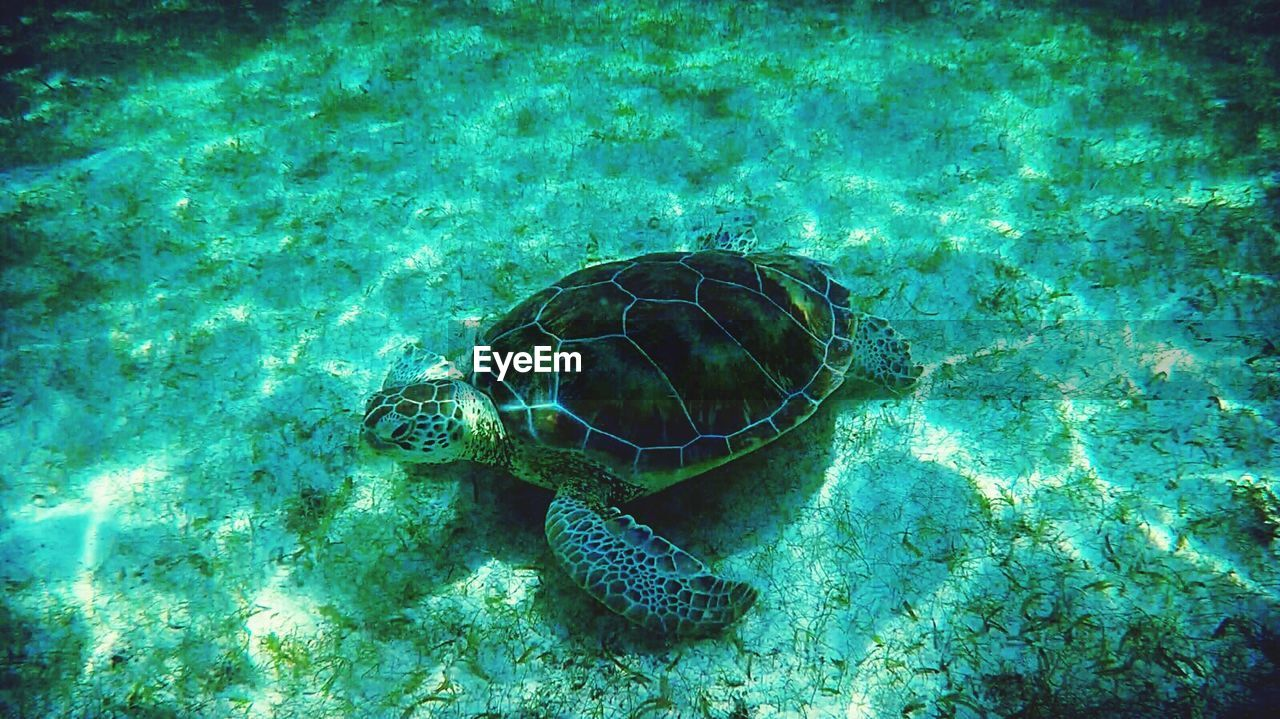 turtle, reptile, sea turtle, animal shell, one animal, animals in the wild, tortoise, sea, tortoise shell, animal wildlife, undersea, underwater, sea life, animal themes, swimming, water, nature, high angle view, no people, day, beauty in nature, outdoors