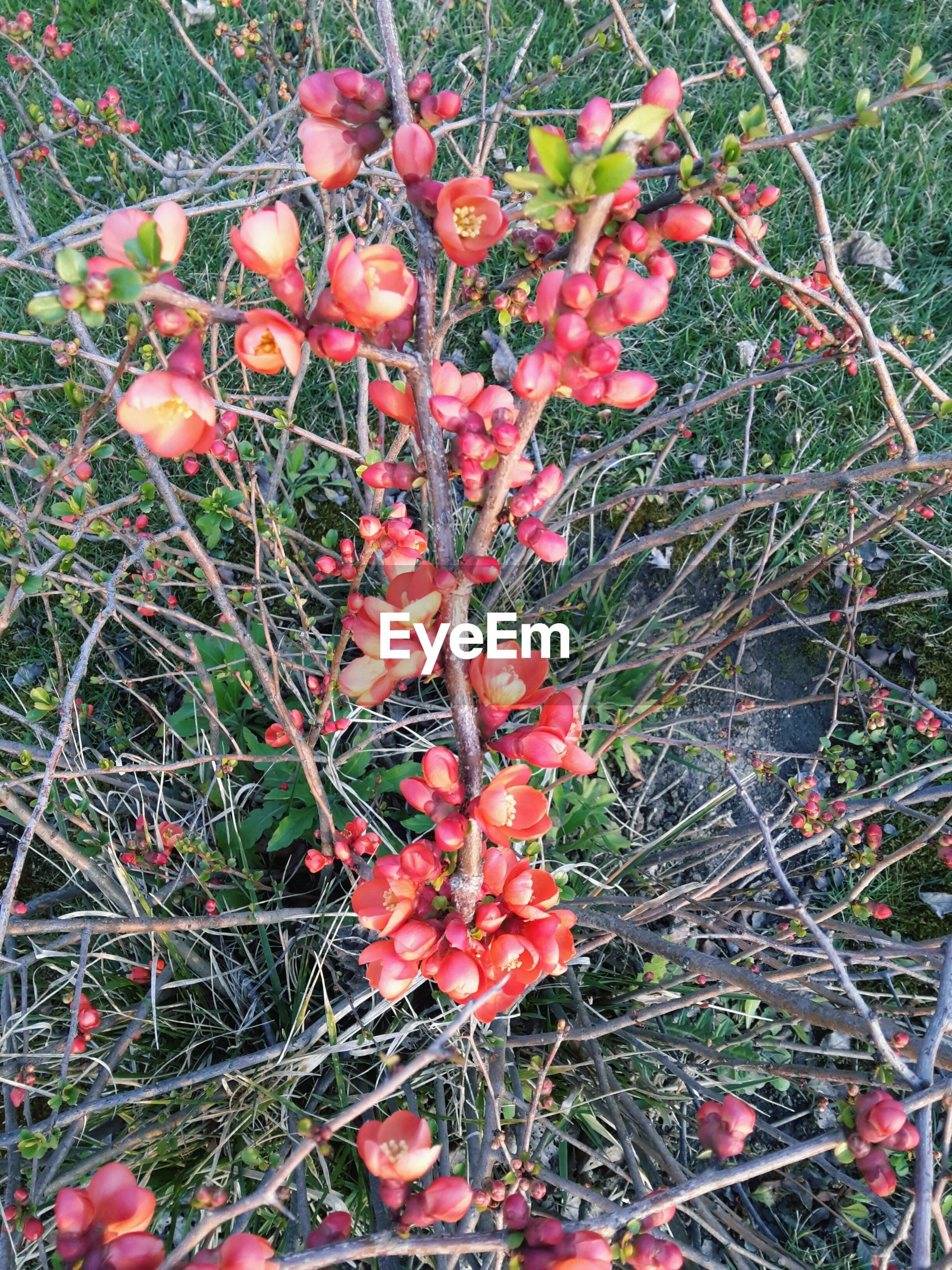 High angle view of red flowers on branch