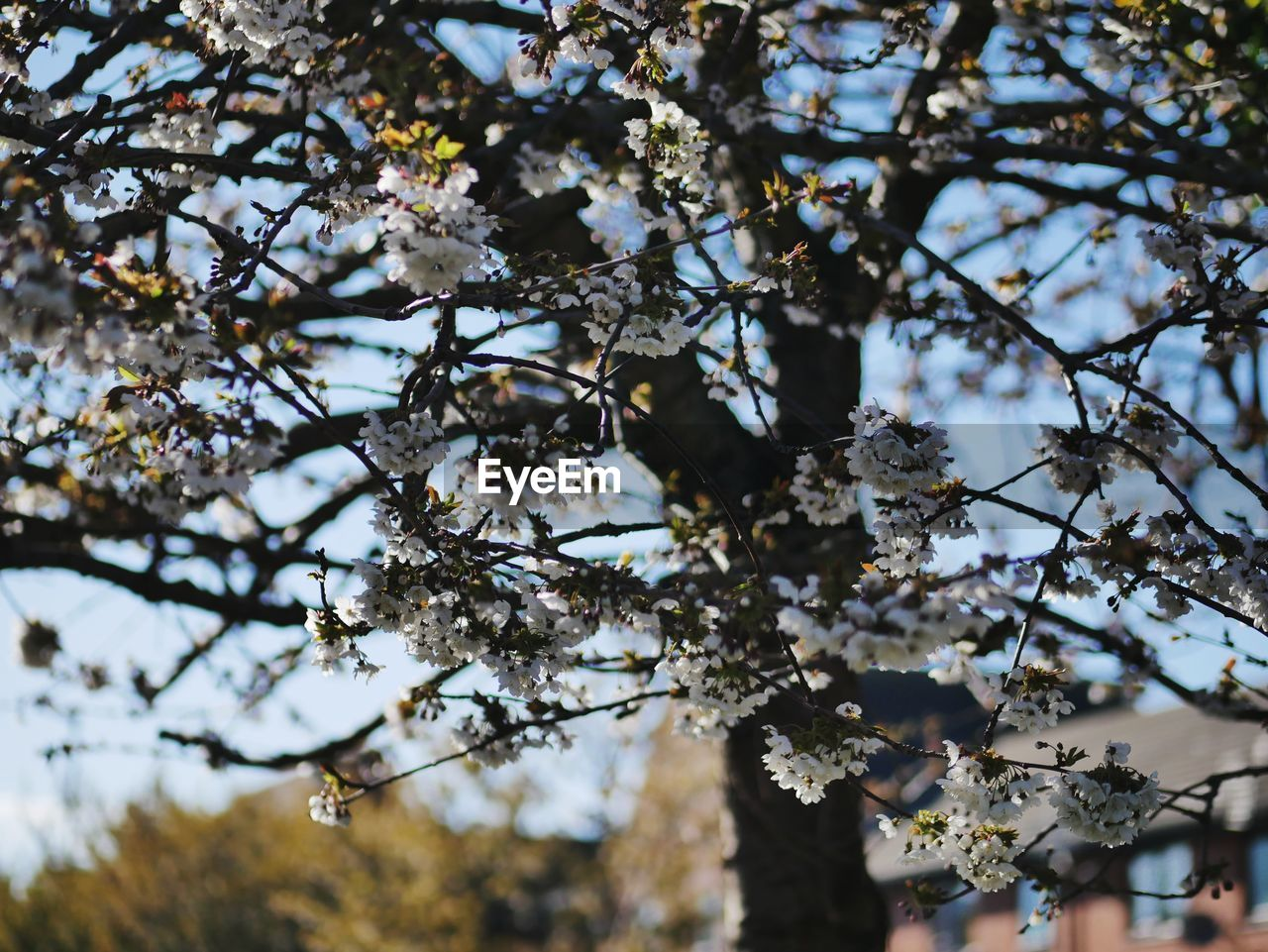 tree, plant, flowering plant, branch, low angle view, flower, blossom, growth, springtime, fragility, beauty in nature, nature, vulnerability, day, focus on foreground, sky, freshness, no people, fruit tree, cherry blossom, outdoors, cherry tree, spring