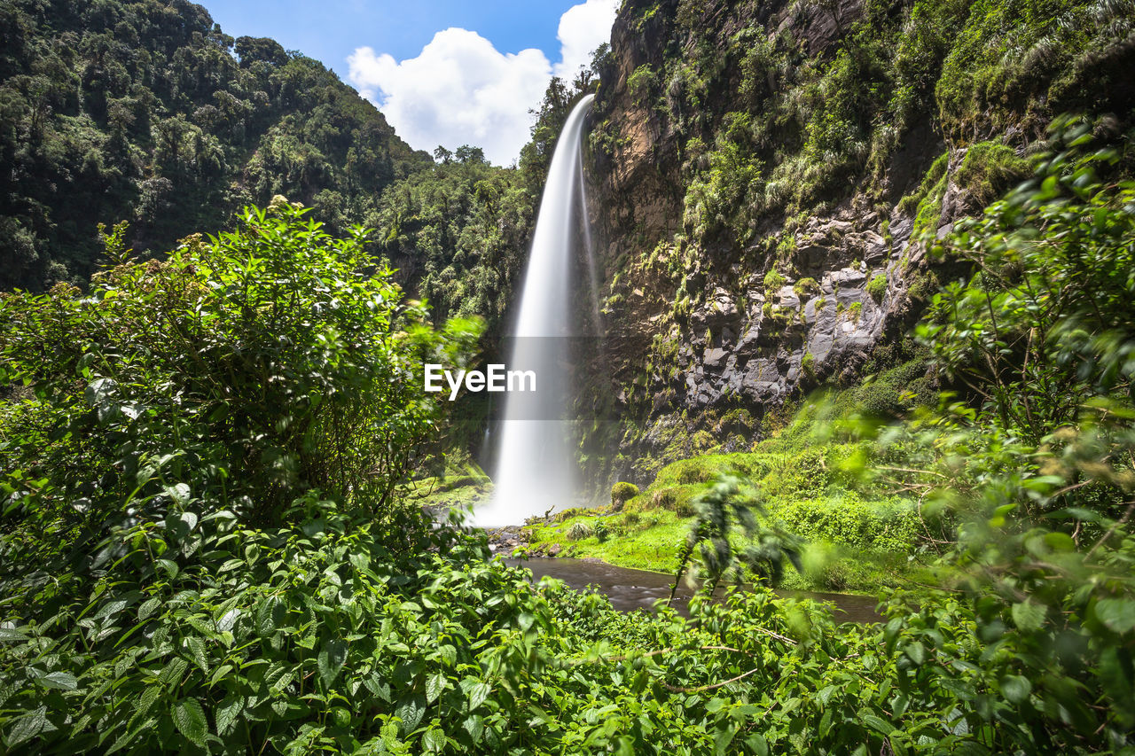 plant, tree, scenics - nature, beauty in nature, waterfall, motion, nature, forest, green color, growth, water, day, long exposure, land, flowing water, foliage, environment, lush foliage, no people, outdoors, power in nature, flowing, rainforest, falling water
