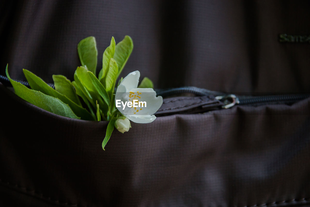 plant, flowering plant, flower, close-up, freshness, beauty in nature, nature, no people, growth, indoors, fragility, green color, vulnerability, plant part, selective focus, leaf, flower head, inflorescence, petal, kitchen utensil