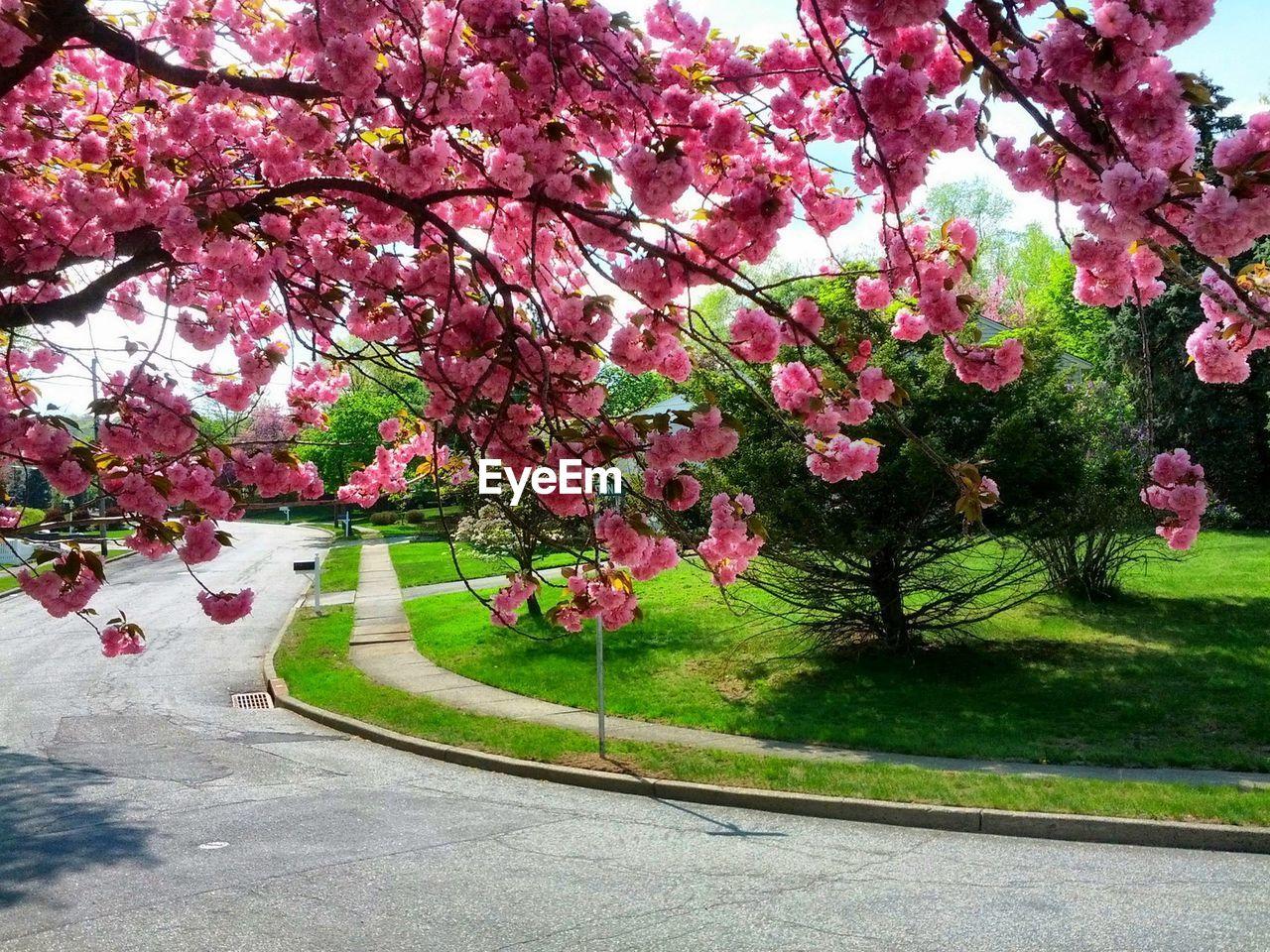 Pink Flowers Growing In Park