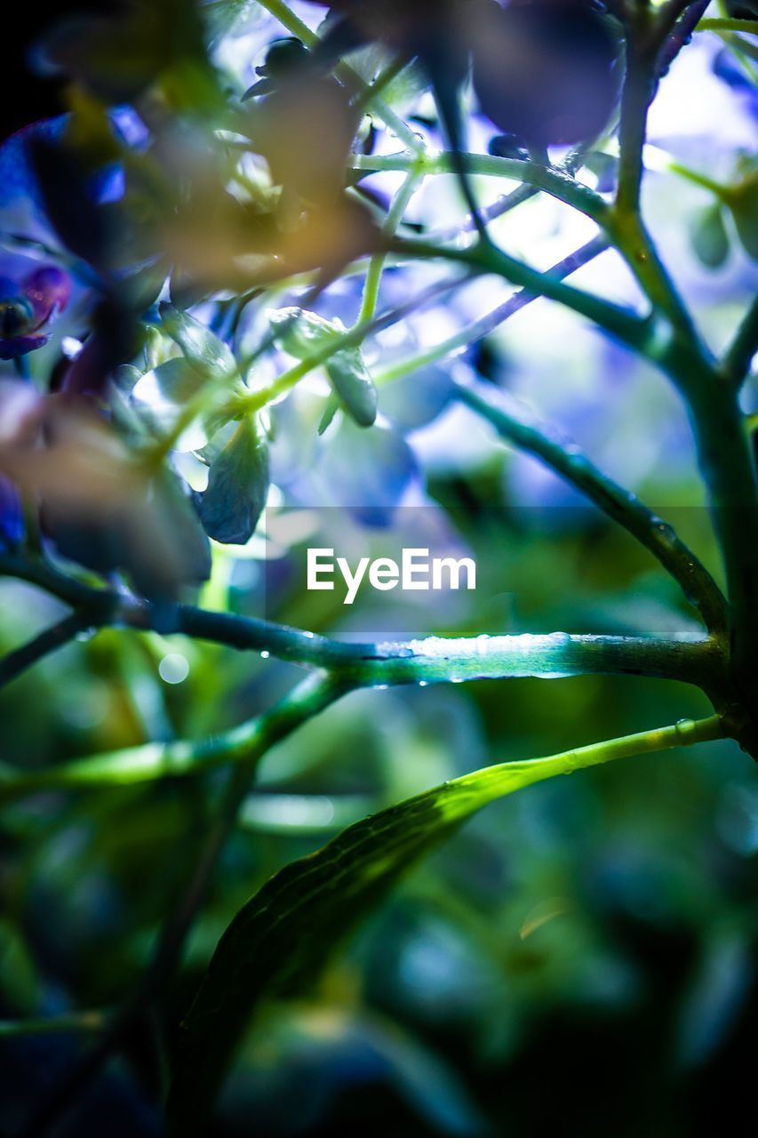 plant, growth, beauty in nature, selective focus, close-up, nature, no people, freshness, vulnerability, flowering plant, flower, fragility, day, tree, outdoors, branch, green color, full frame, backgrounds, plant part, purple