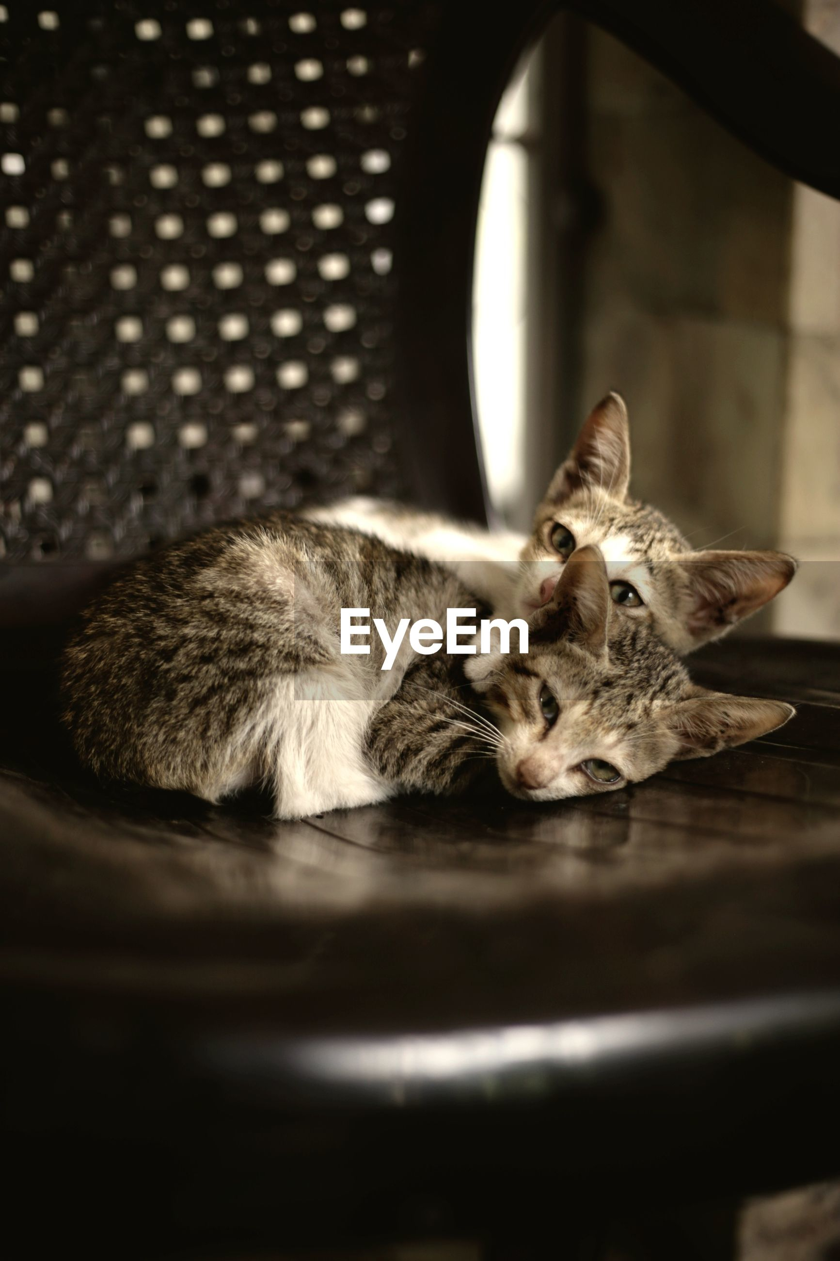 one animal, animal themes, pets, domestic cat, domestic animals, mammal, feline, indoors, no people, relaxation, close-up, day