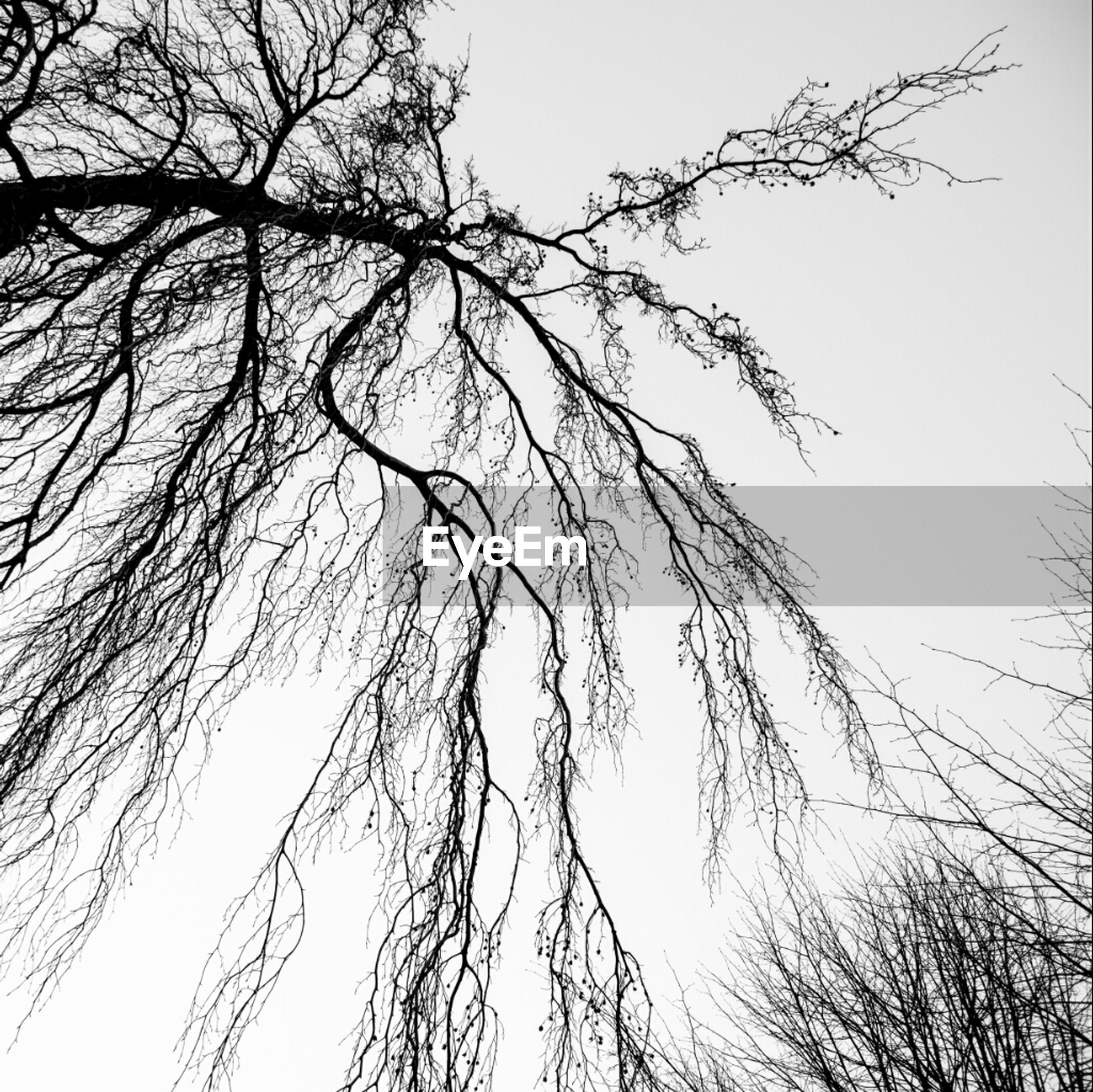 High section of bare trees against clear sky