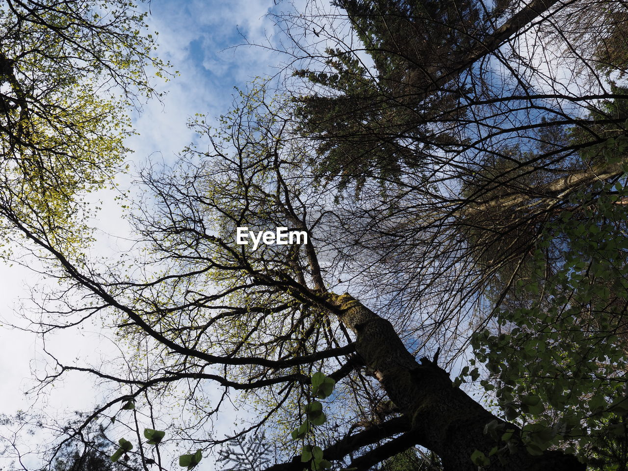 tree, low angle view, branch, nature, day, no people, outdoors, sky, bare tree, beauty in nature, animal themes