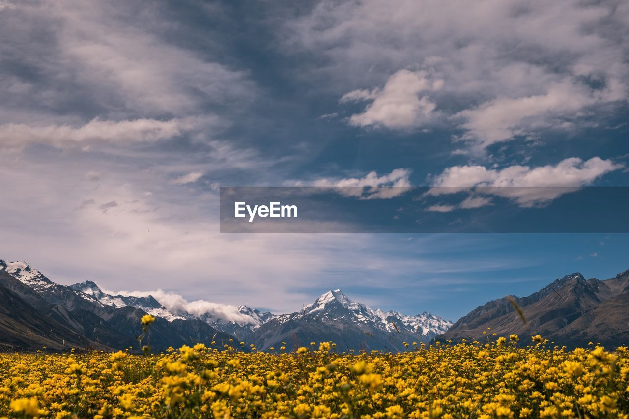 beauty in nature, sky, cloud - sky, yellow, scenics - nature, tranquil scene, tranquility, mountain, landscape, flower, nature, environment, plant, mountain range, flowering plant, no people, idyllic, non-urban scene, day, snowcapped mountain, mountain peak