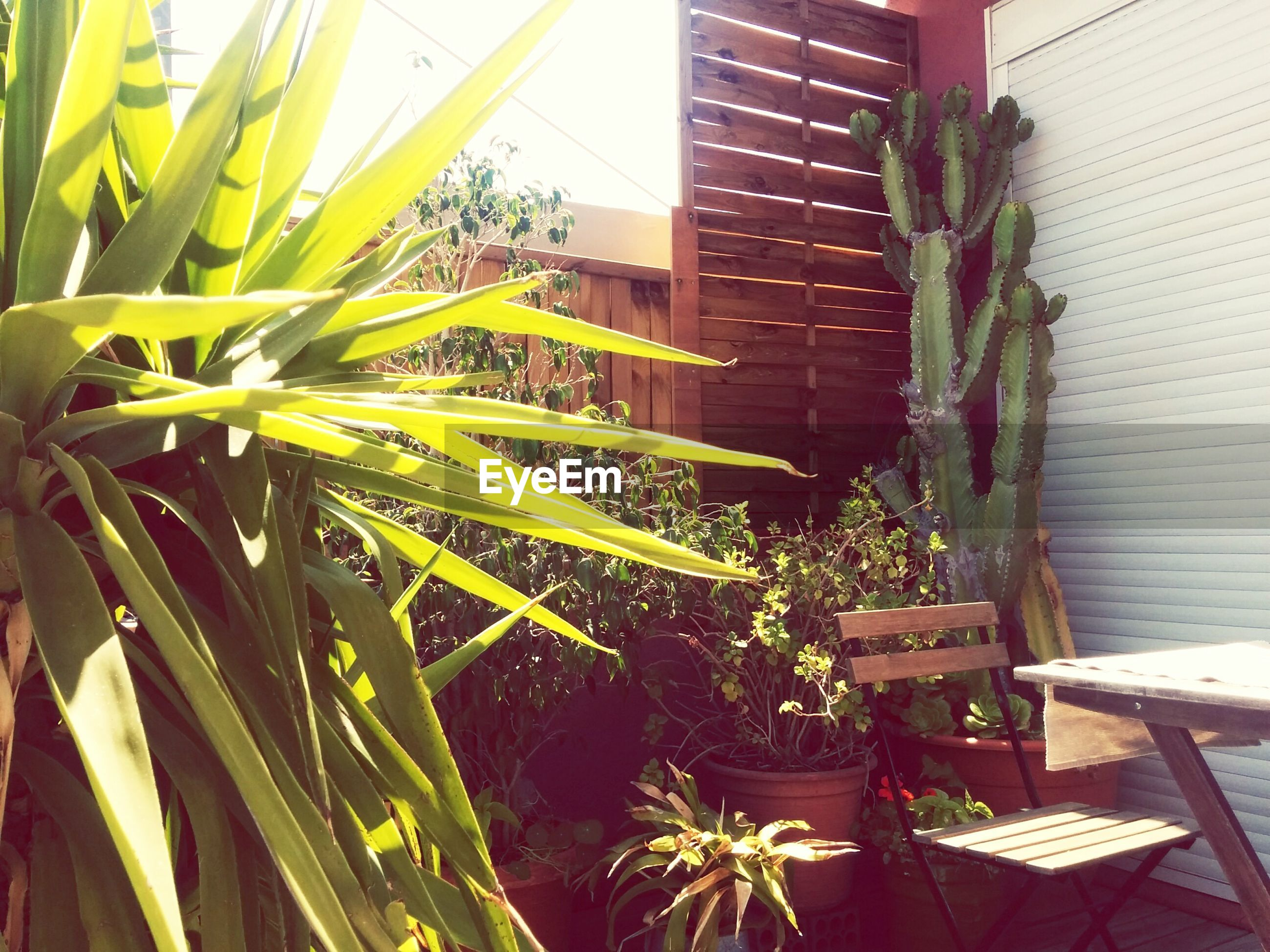 Potted plants by table and chair during sunny day