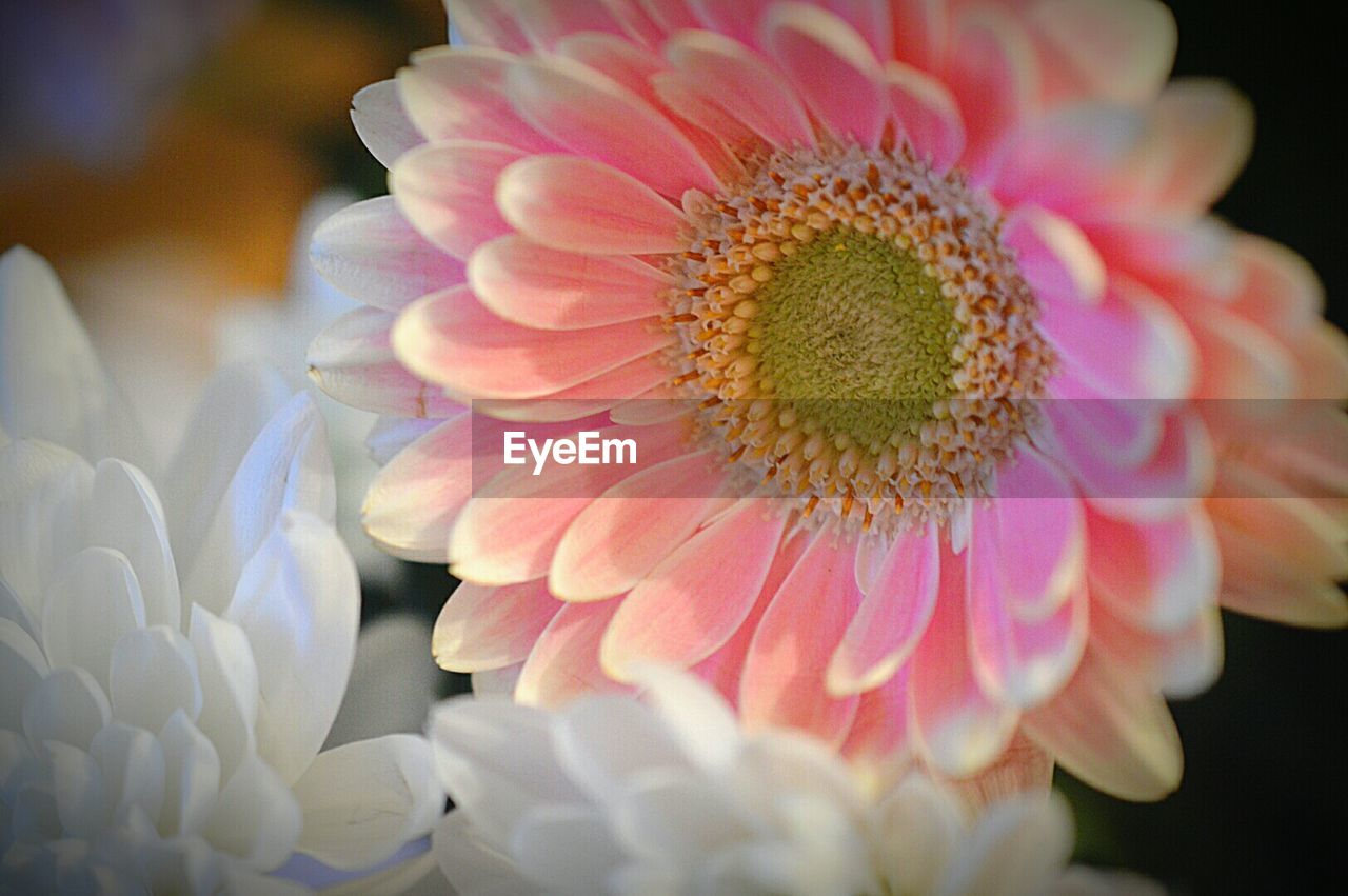 flower, petal, beauty in nature, flower head, fragility, close-up, freshness, growth, nature, no people, pollen, blooming, plant, day, outdoors, passion flower