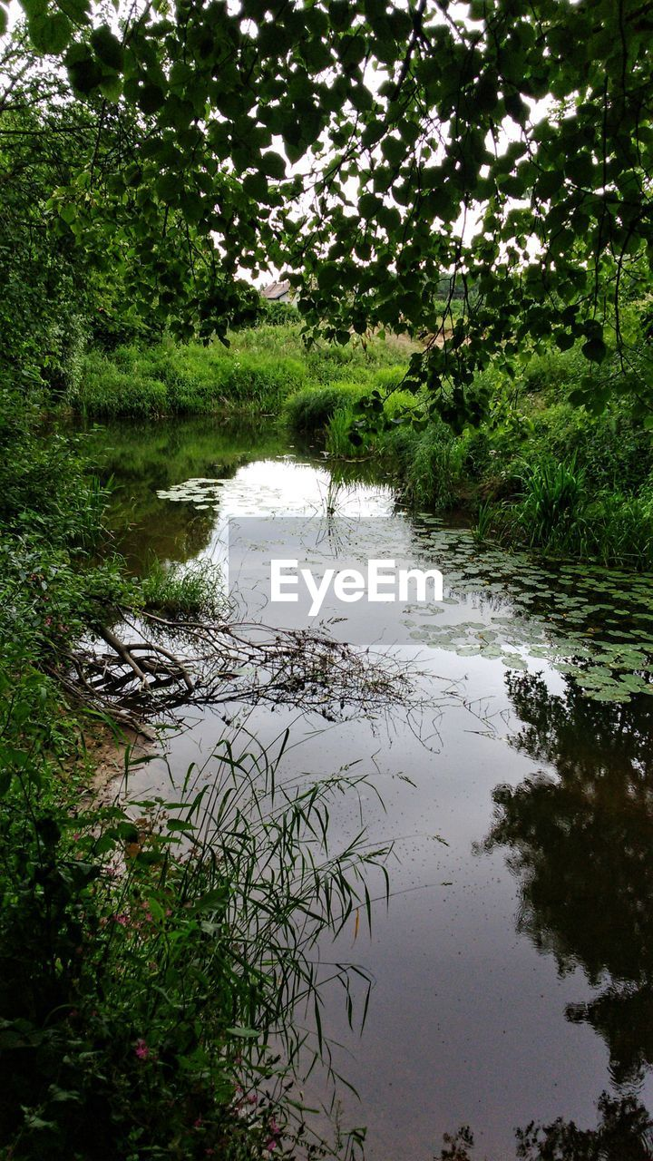 water, nature, tree, growth, tranquility, tranquil scene, beauty in nature, reflection, no people, outdoors, plant, scenics, day, forest, lake, grass, landscape