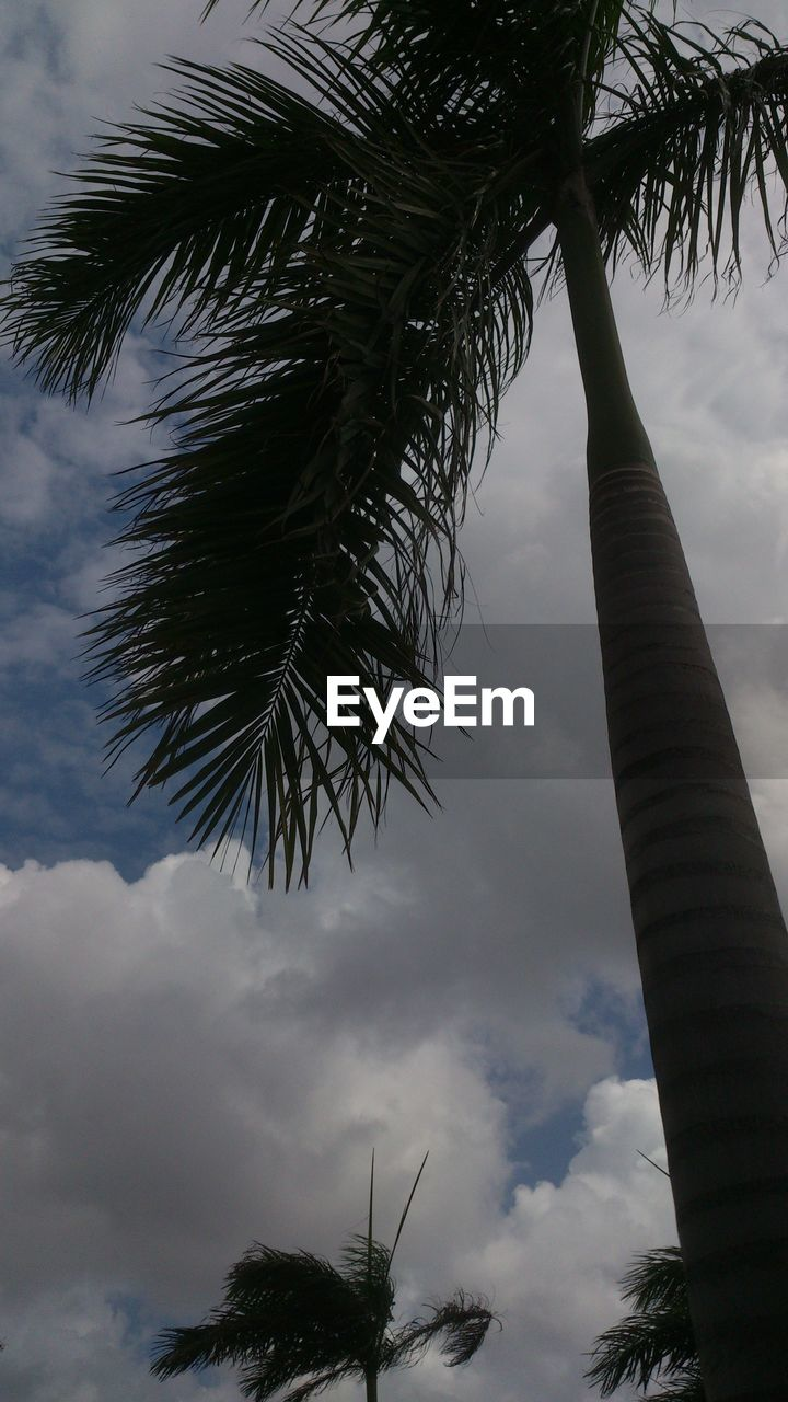 tree, palm tree, sky, low angle view, cloud - sky, outdoors, tree trunk, day, growth, nature, no people, branch, beauty in nature